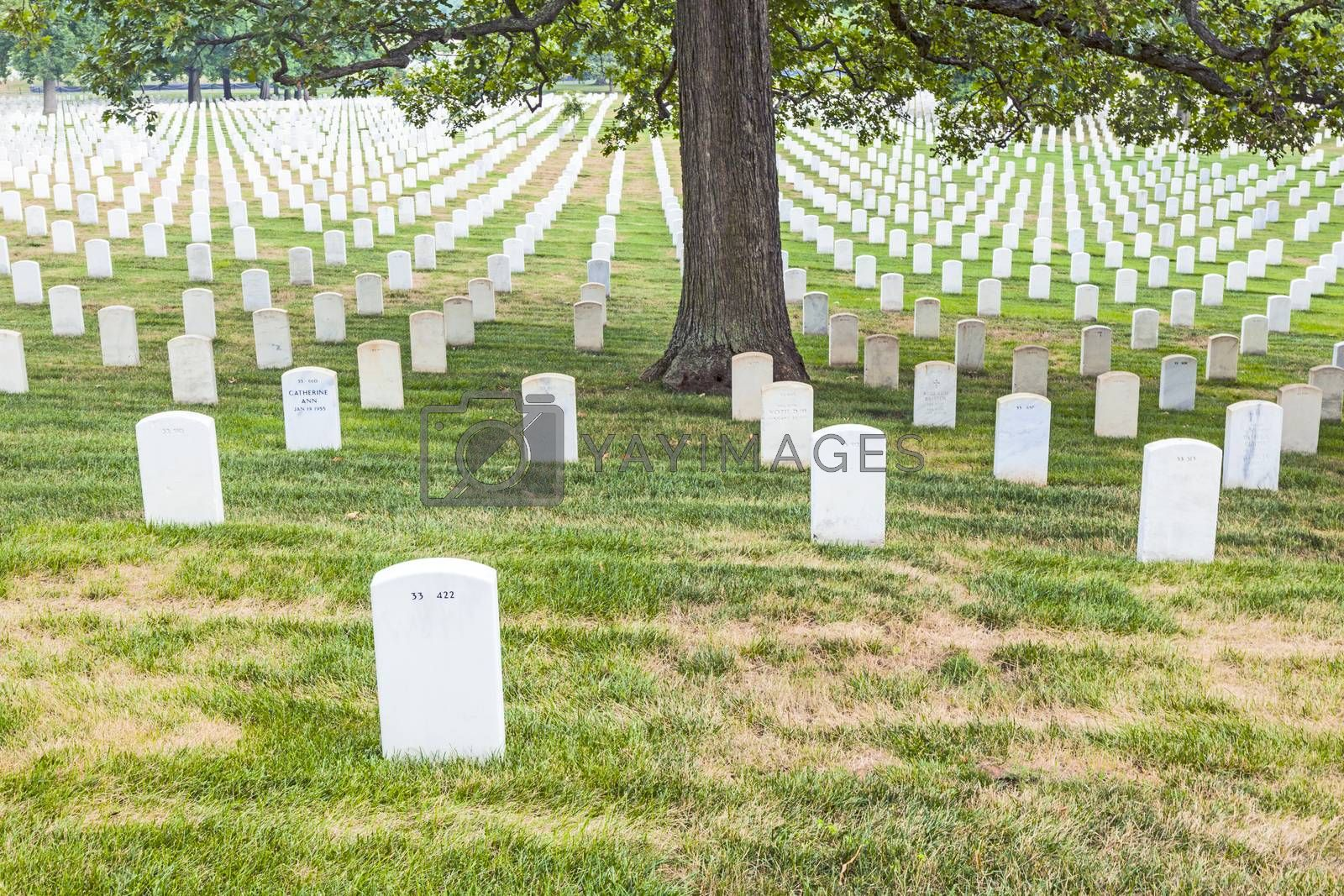 Royalty free image of Gravestones on Arlington National Cemetery by meinzahn