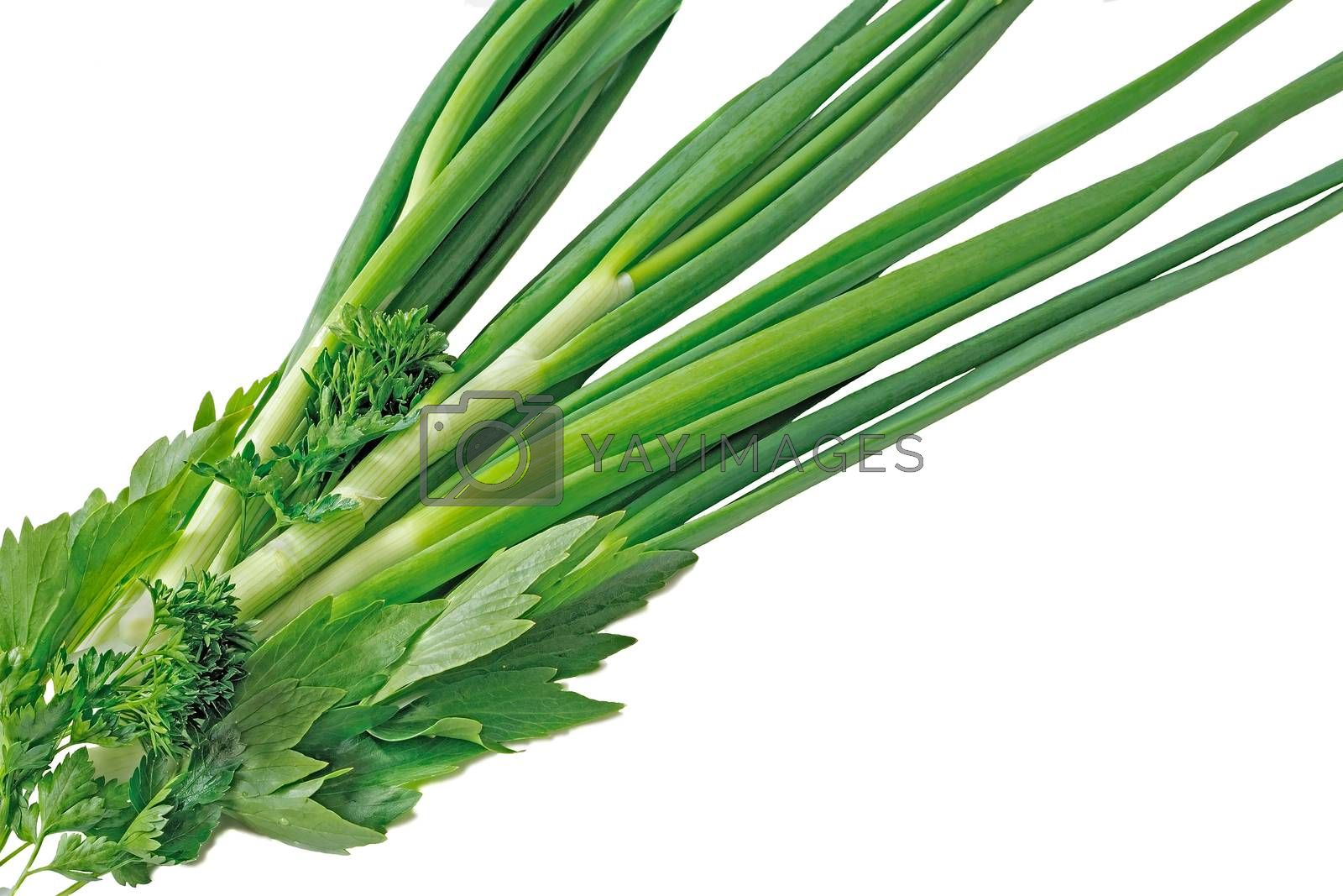 Royalty free image of Green onions, parsley and sorrel on a white background by georgina198