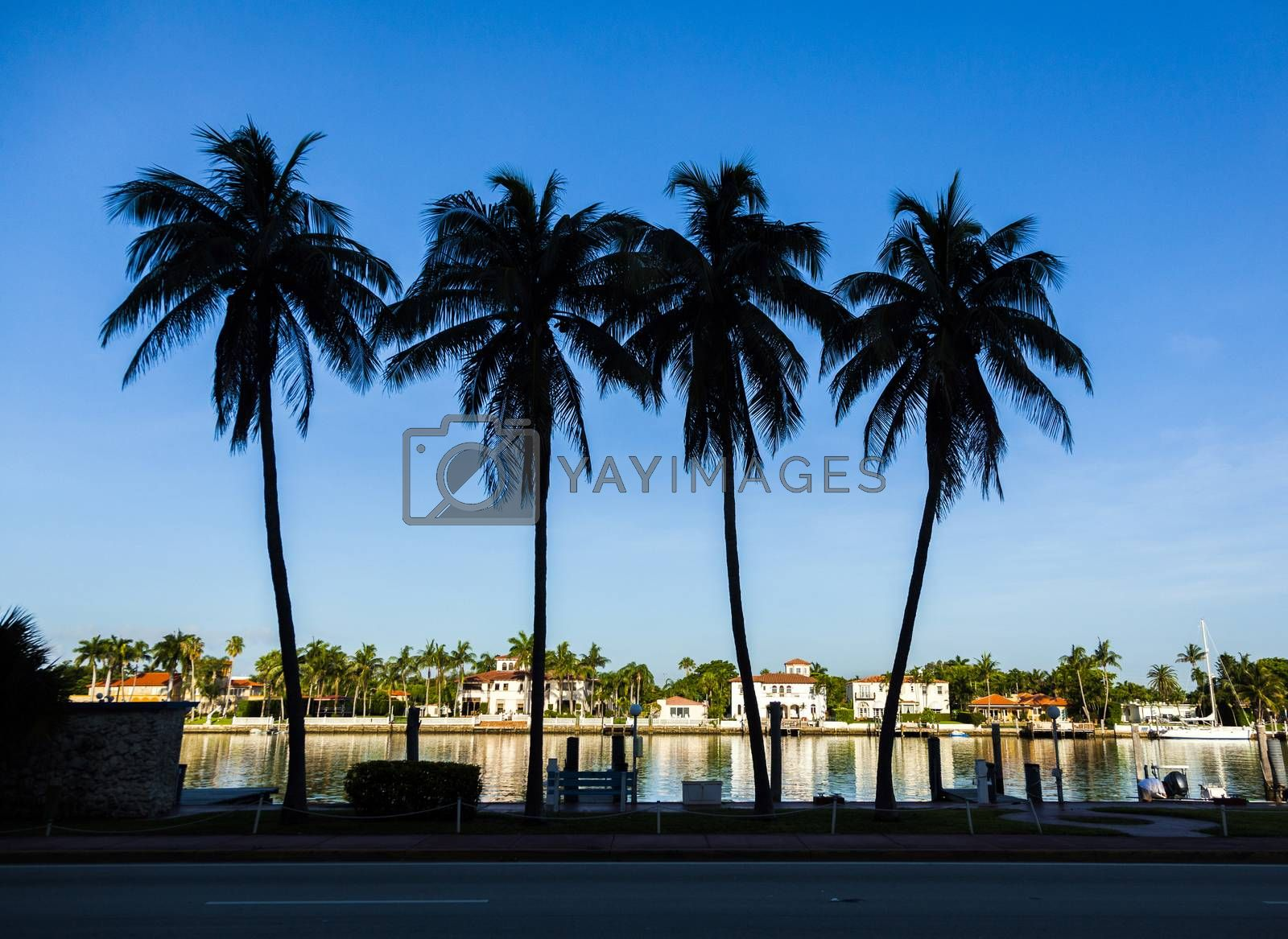 Royalty free image of luxury houses at the canal in Miami by meinzahn
