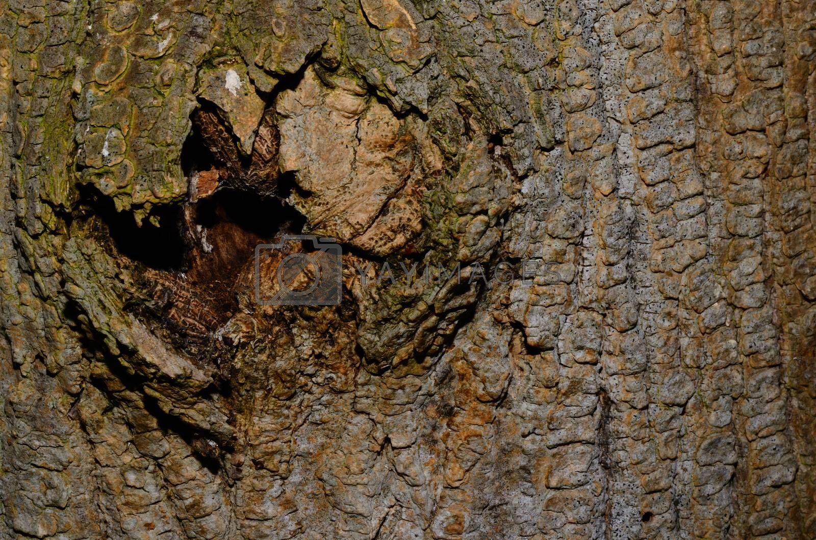 Royalty free image of hole in tree bark by thomaseder