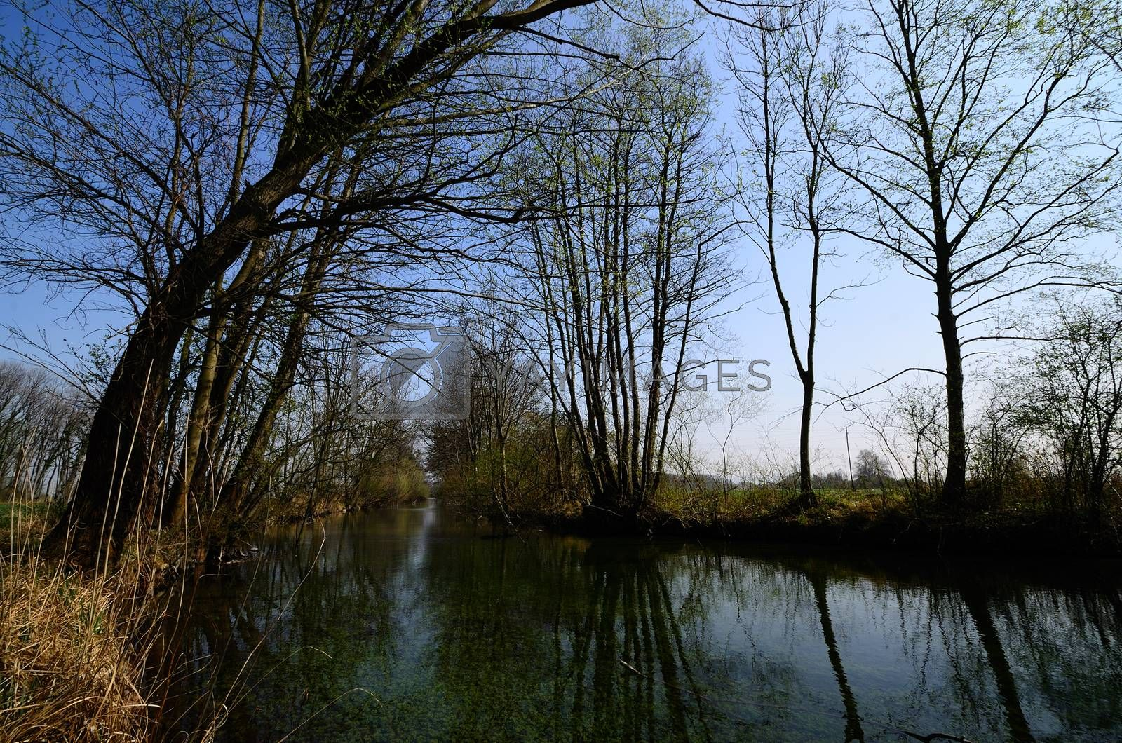 Royalty free image of river landscape by thomaseder