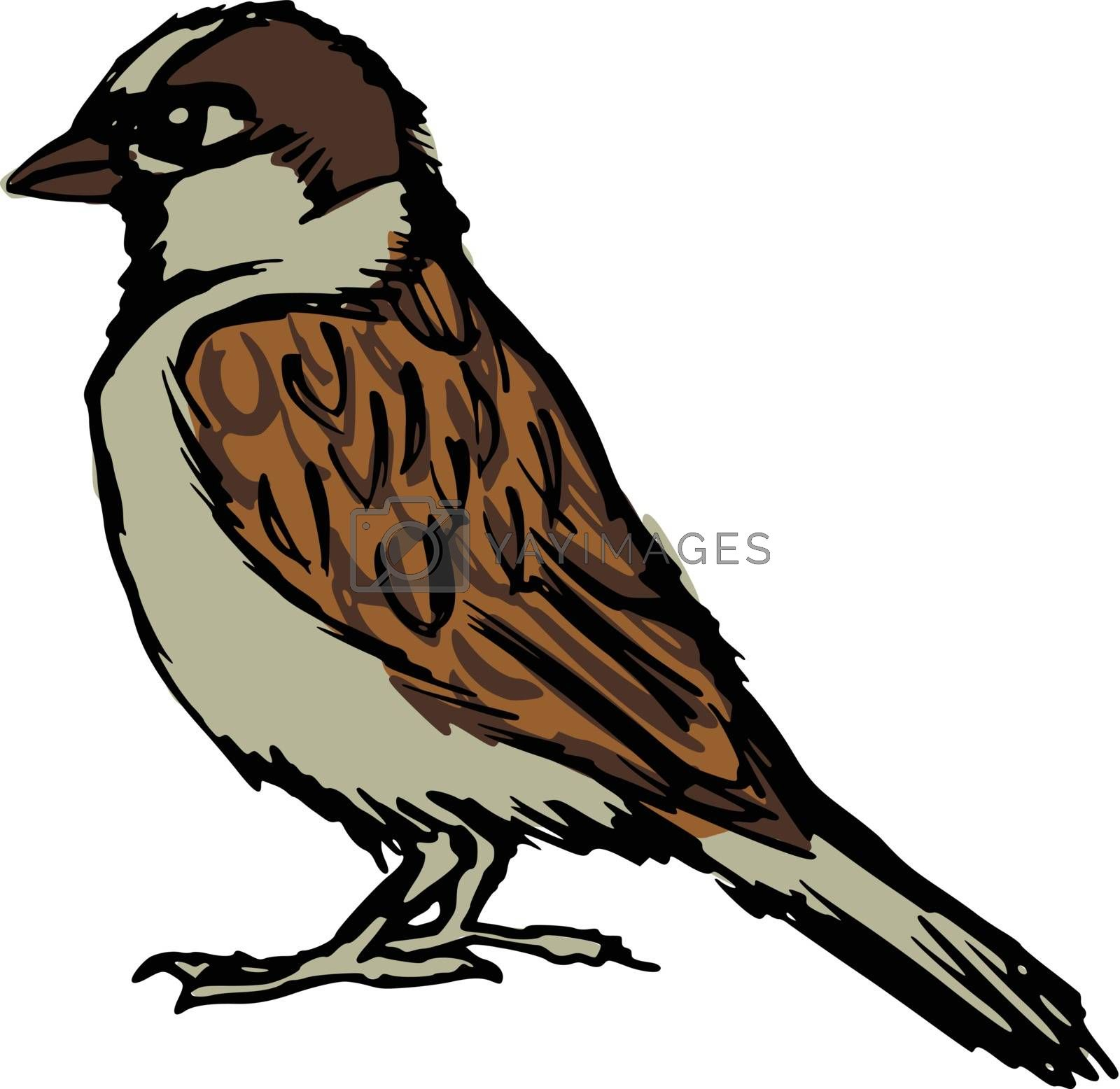 hand drawn, sketch, cartoon illustration of sparrow