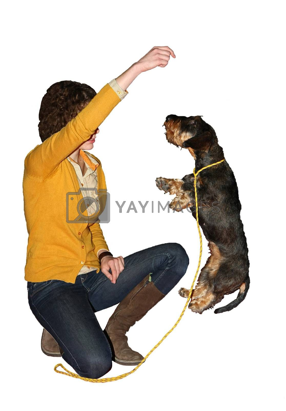 Young girl and her wirehaired dachshund showing skills at  International Dog Show,CACIB, Beograd,Serbia,white background