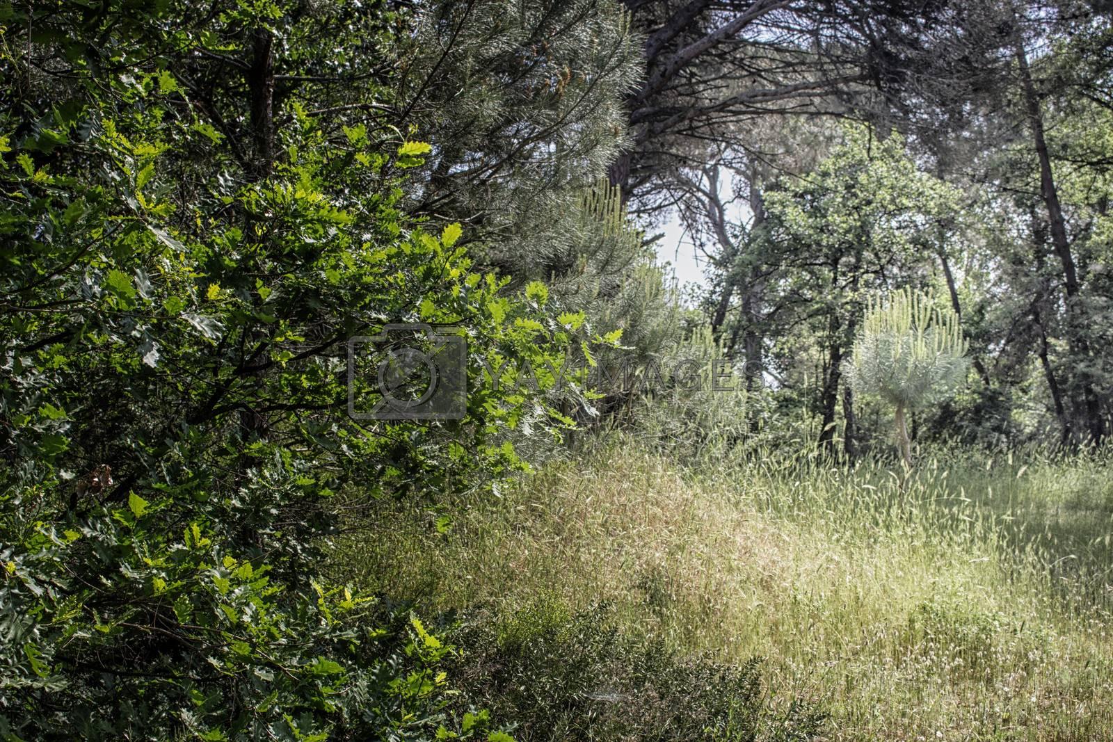 Plants in the pinewood forest along the Pialassa della Baiona brackish lagoon near Marina Romea on the  Adriatic seaside in Ravenna (Italy)