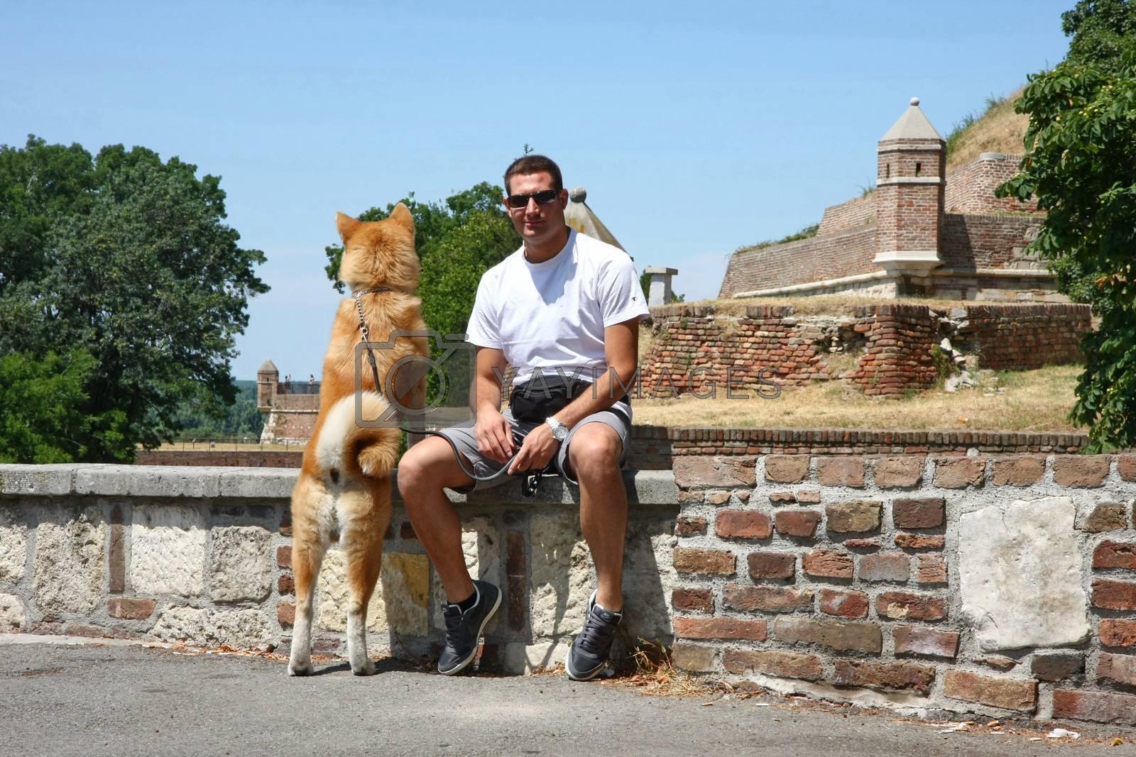 Japanese eight-month dog Akita Inu  at Belgrade fortress Kalemegdan,Serbia