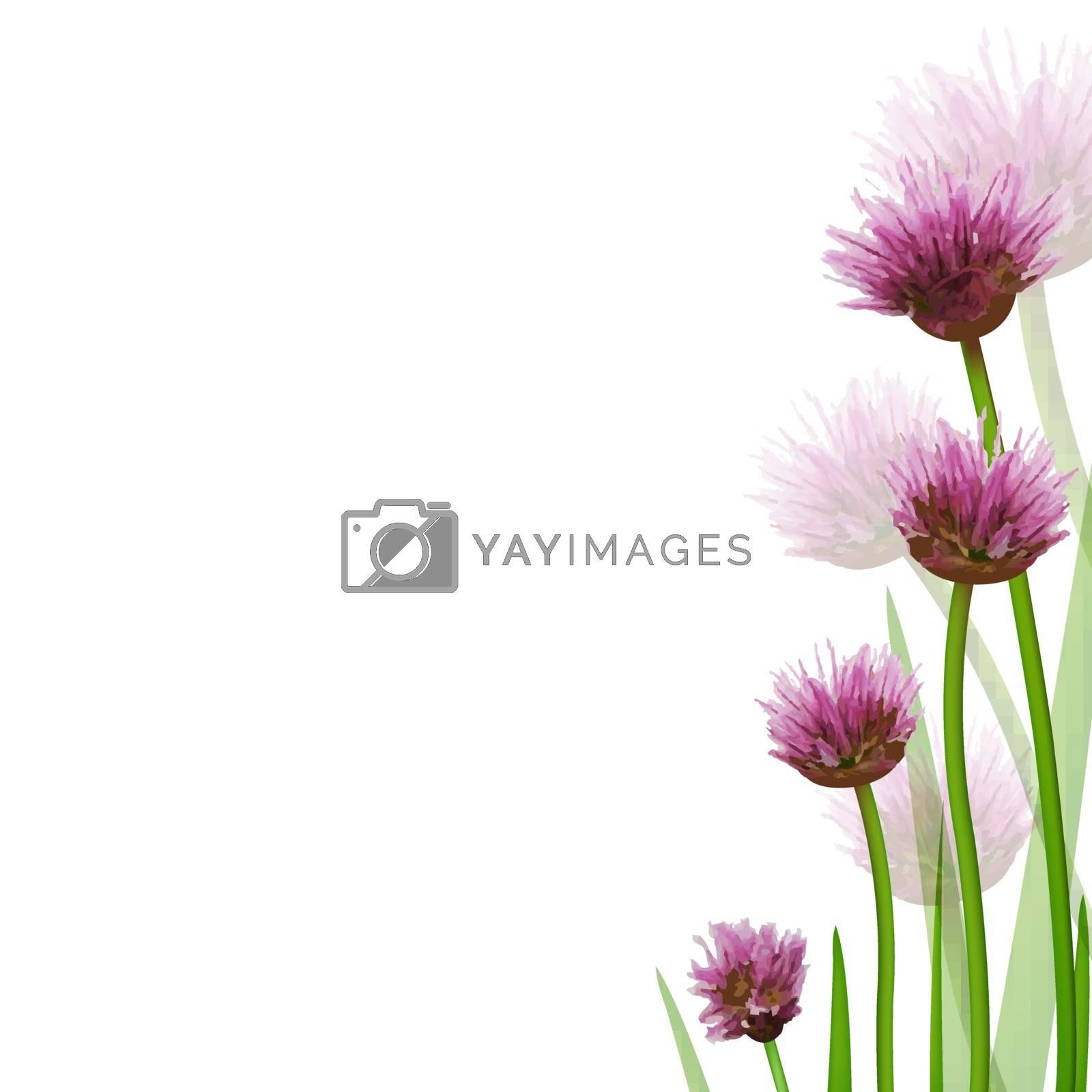 Flower Border, Isolated On White Background, Vector Illustration