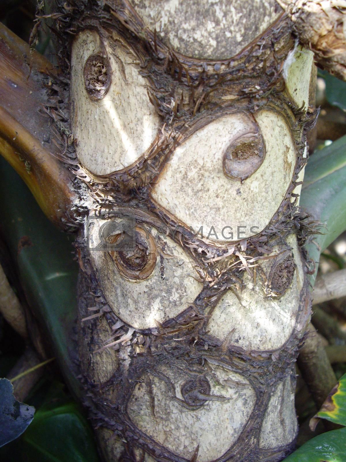 Trimmed Palm Bark by emattil