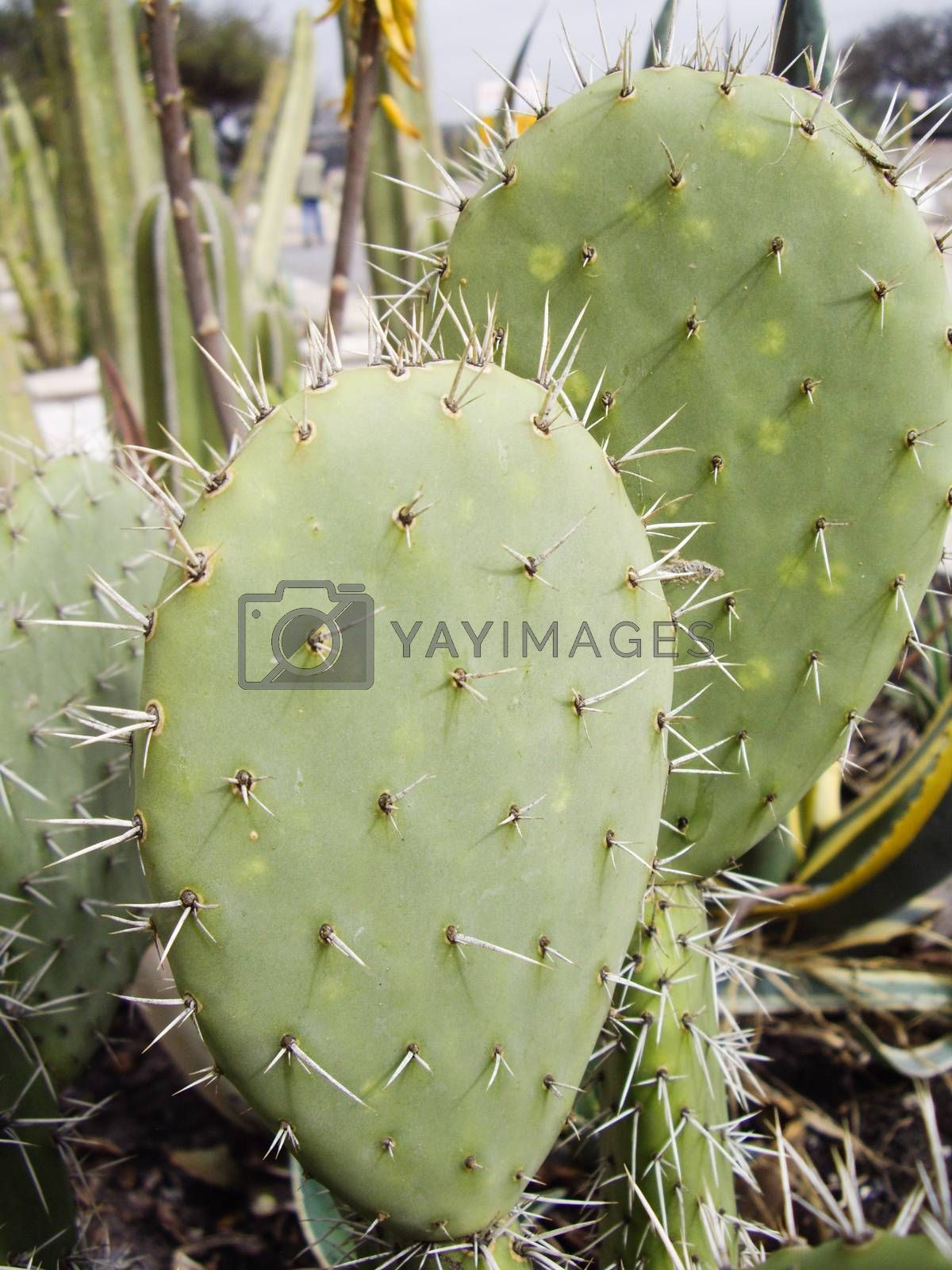 Spines on Cactus by emattil