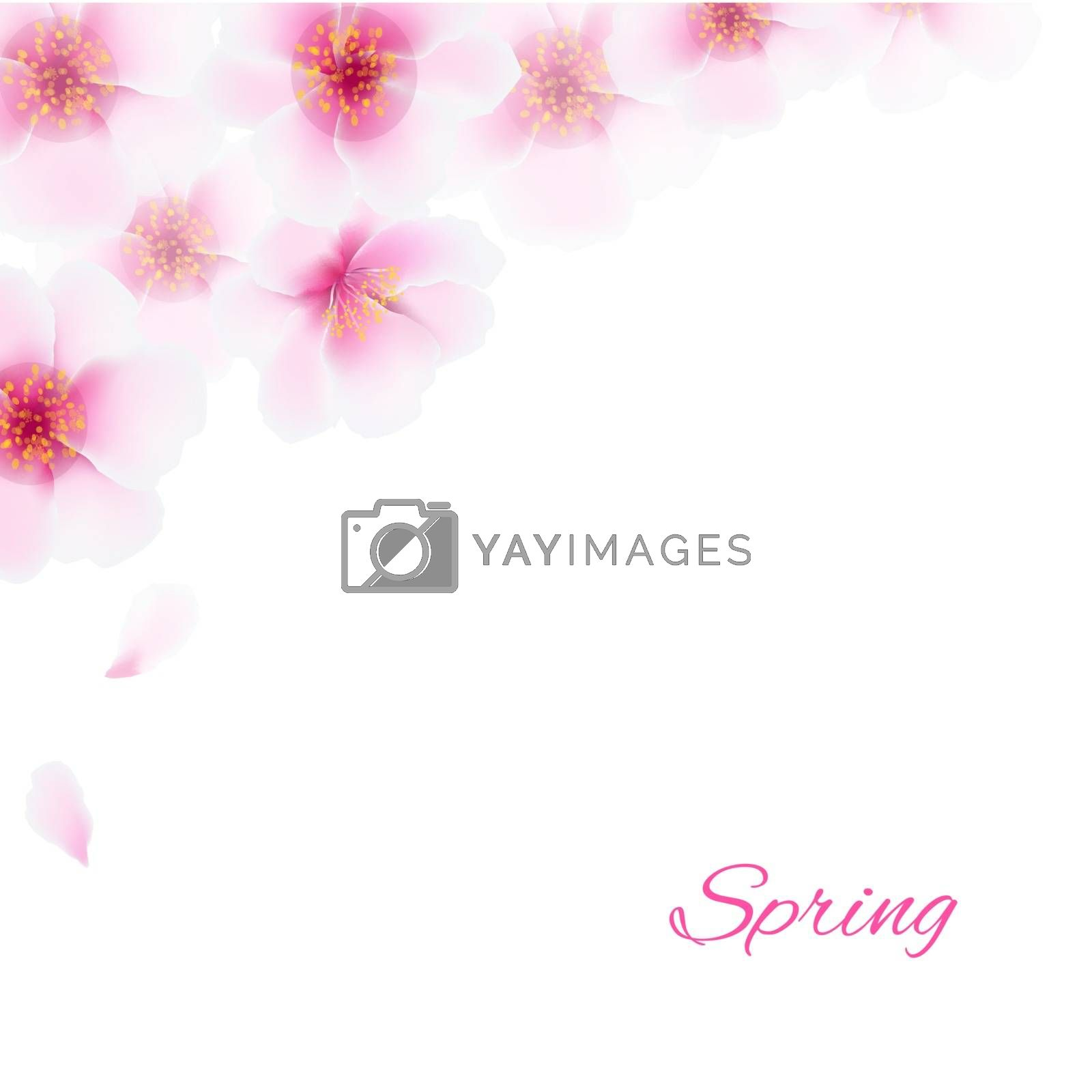 Pink Cherry Flowers Border by barbaliss
