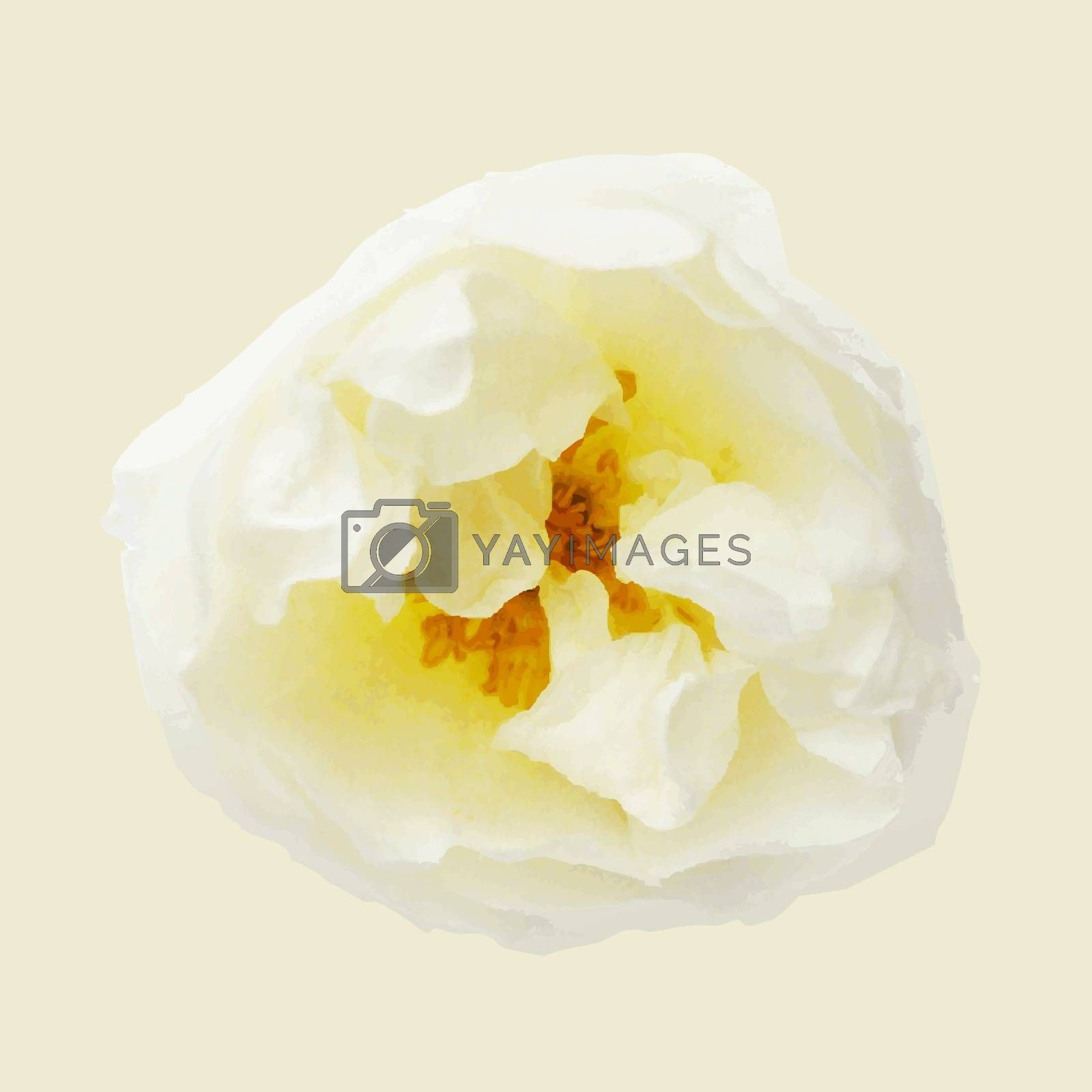 Pastel Rose, Vector Illustration by barbaliss
