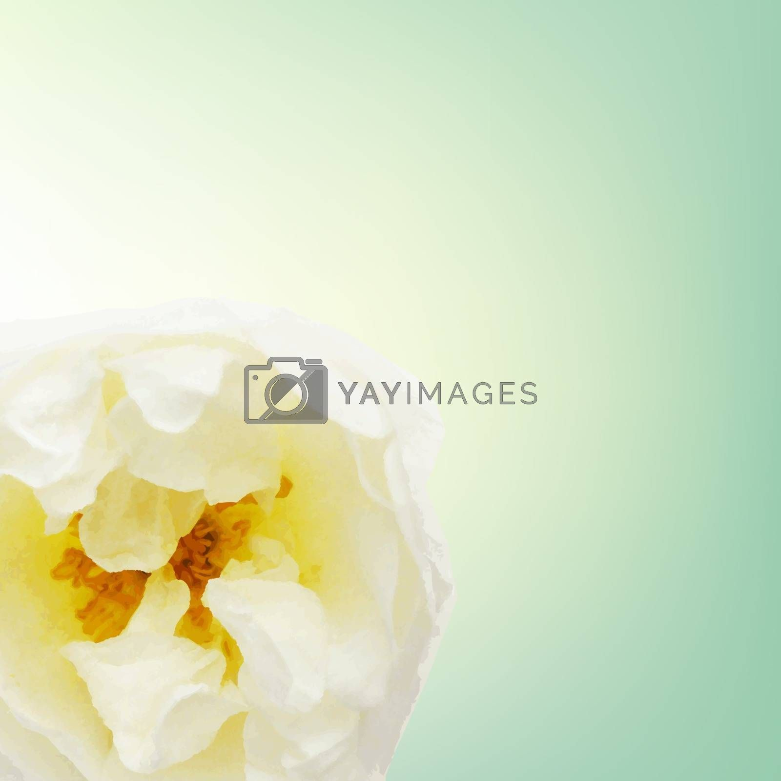 Pastel Rose Card by barbaliss
