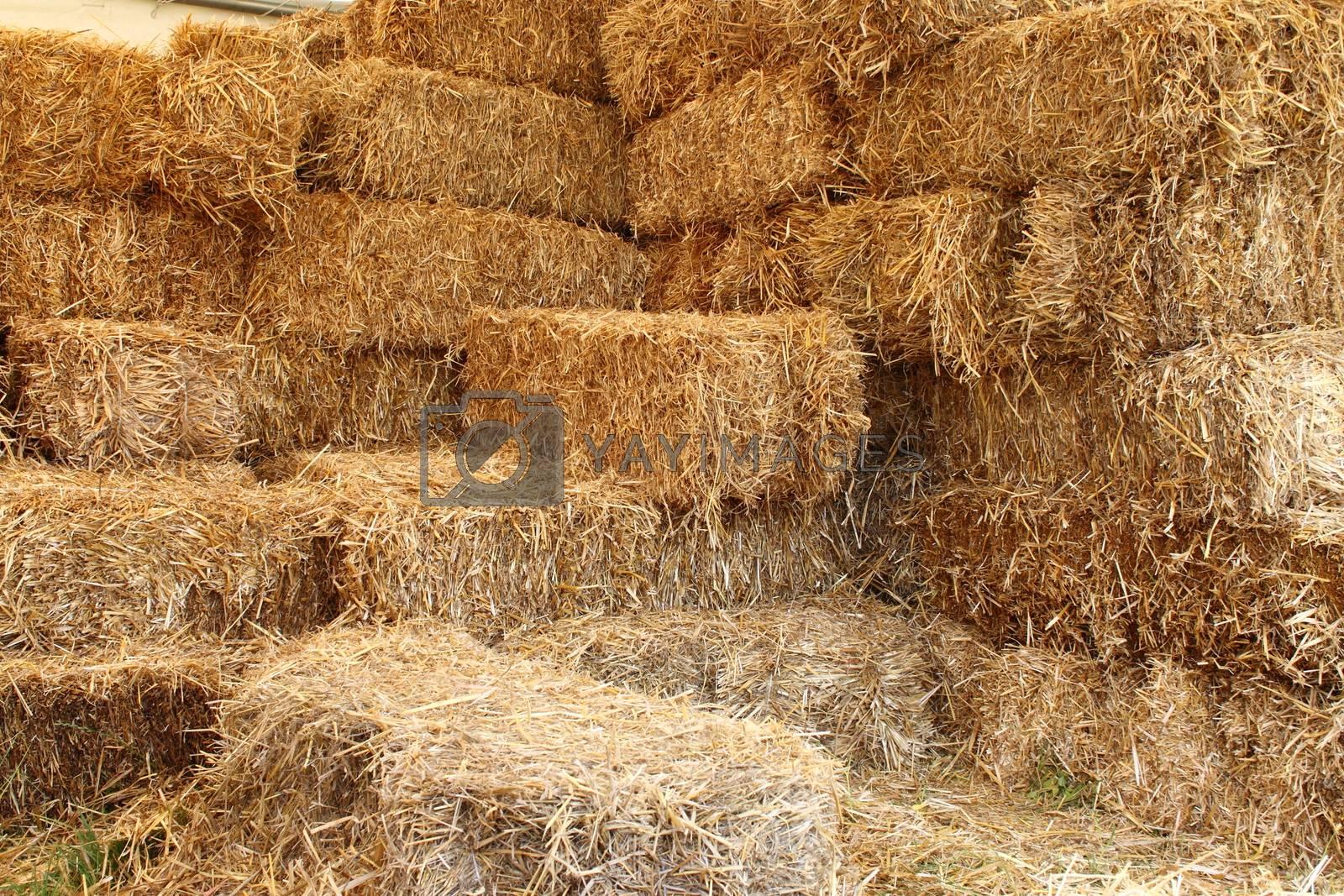 Barn by alessandro0770