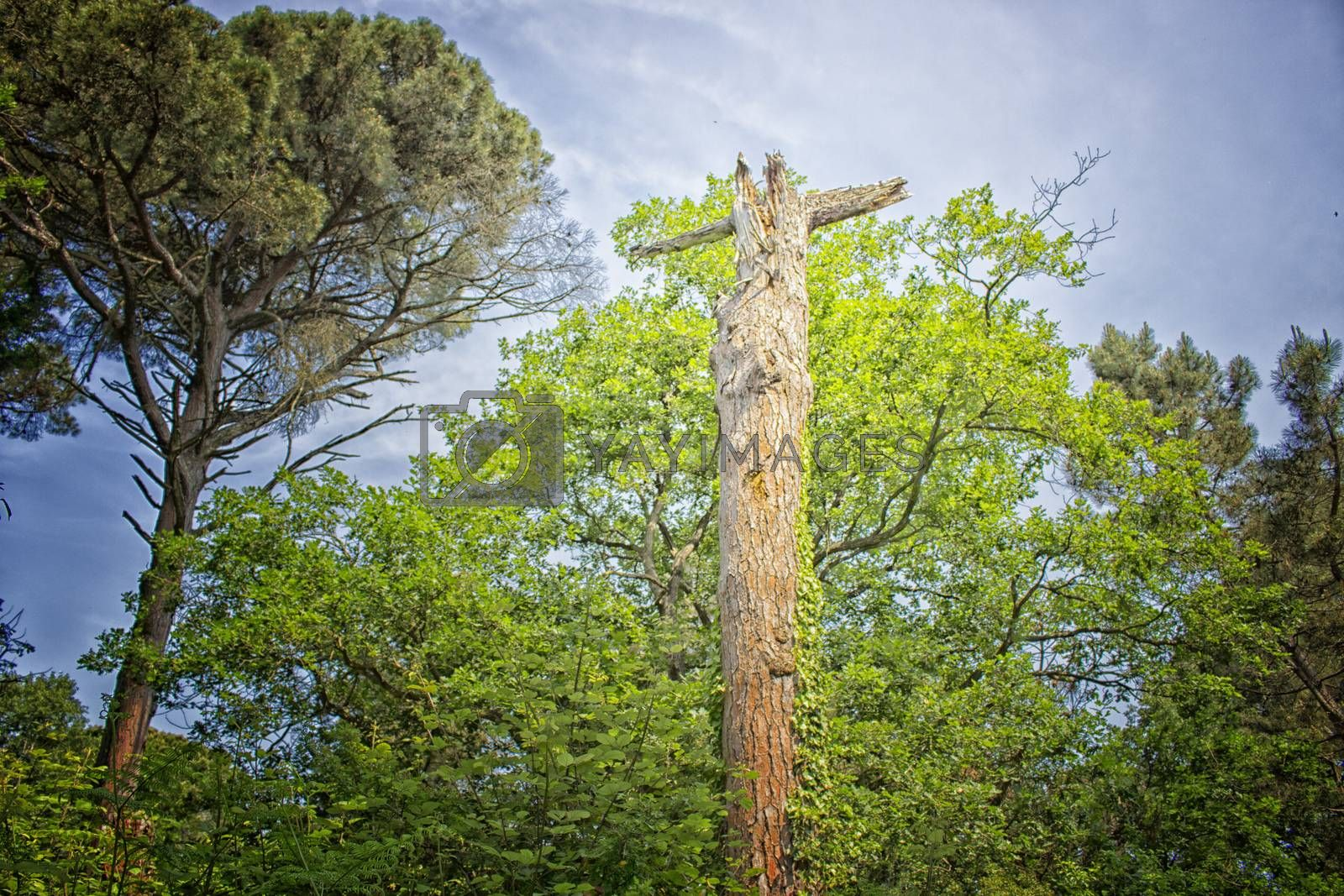 Natural Cross in Pinewood forest near Marina Romea by paocasa