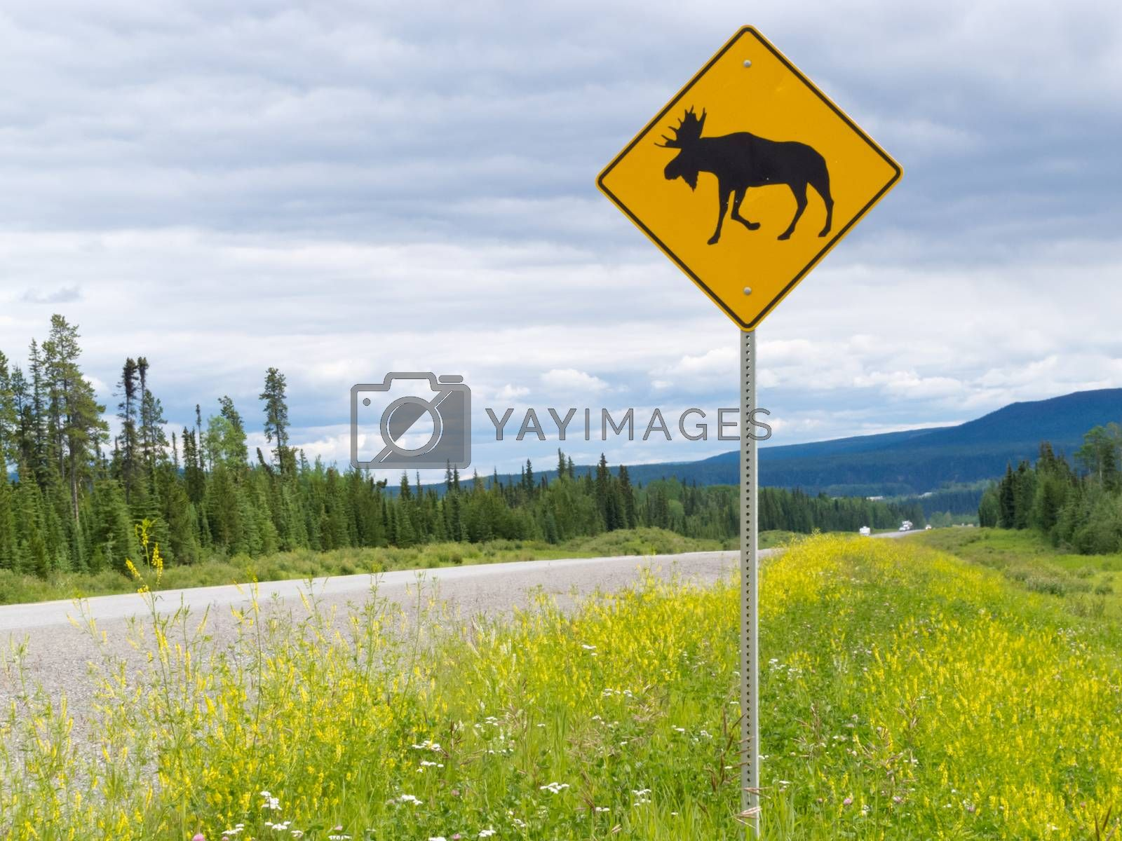 Highway warning roadsign attention moose crossing by PiLens