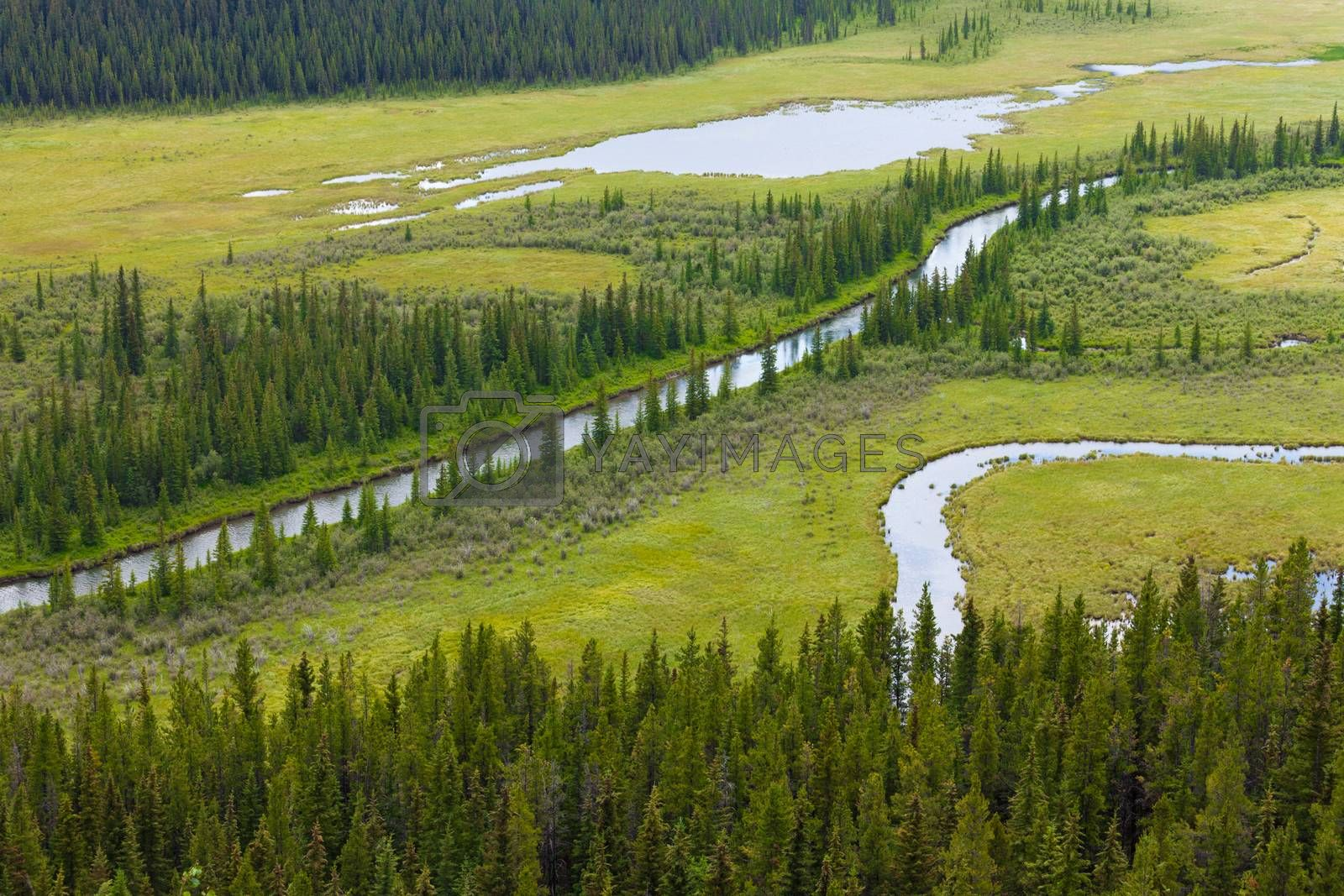 Marshland river riparian wetland landscape by PiLens