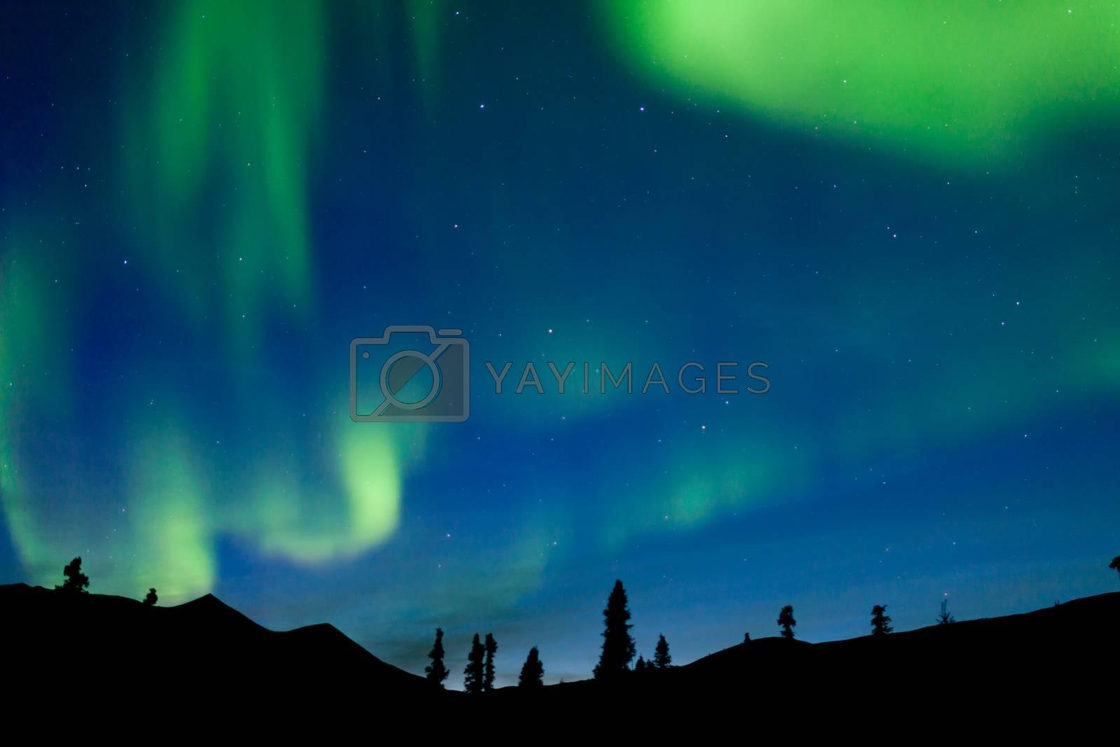 Dancing northern lights spruce taiga Yukon Canada by PiLens