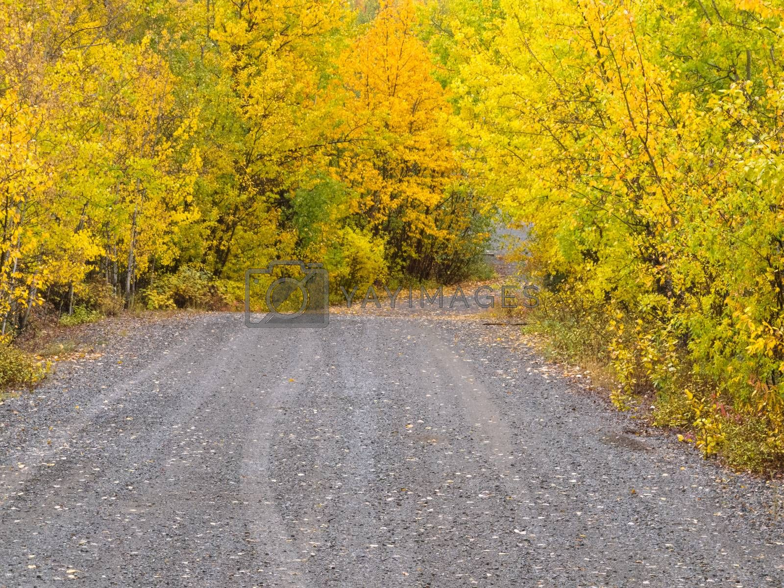 Small dirt road golden taiga fogs Yukon Canada by PiLens