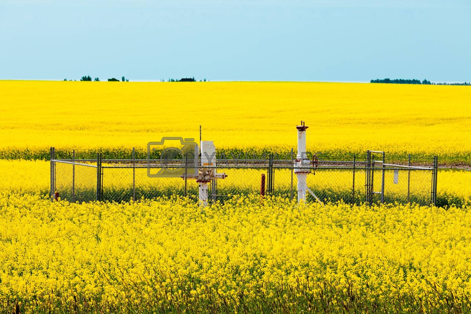 Natural gas wellheads canola agricultural farmland by PiLens