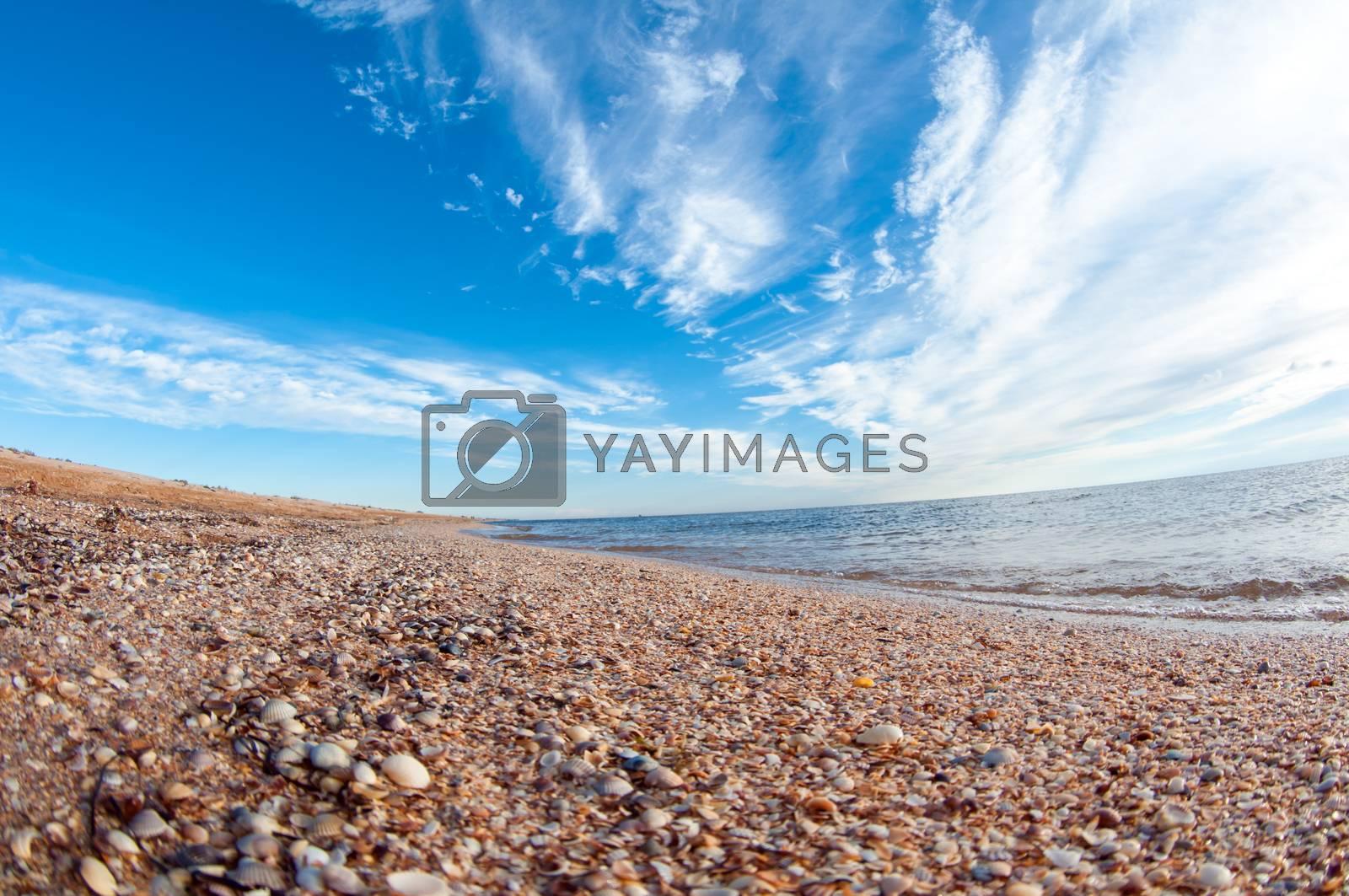 Shelly beach. by bashta