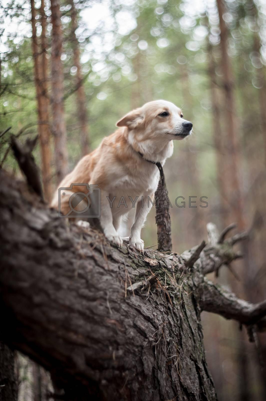 dog on a tree by bashta