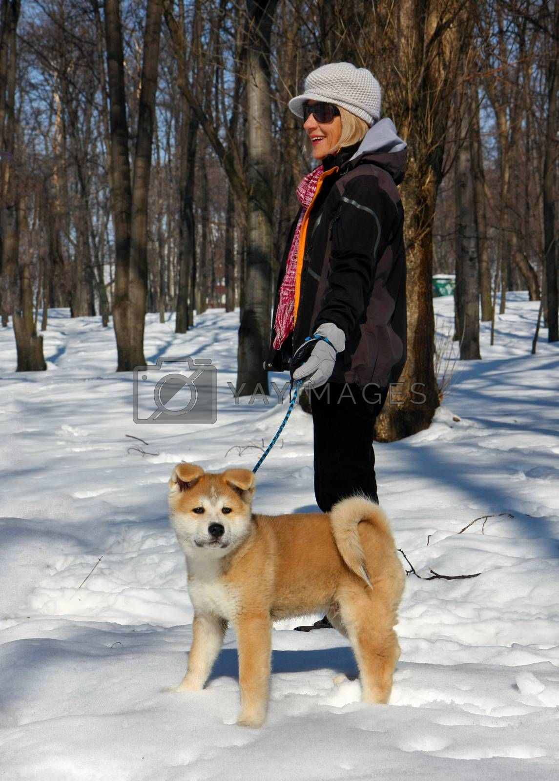 Puppie of Japanese dog Akita Inu, with lady,walking in the park ,Belgrade,Serbia.First steps on the snow.