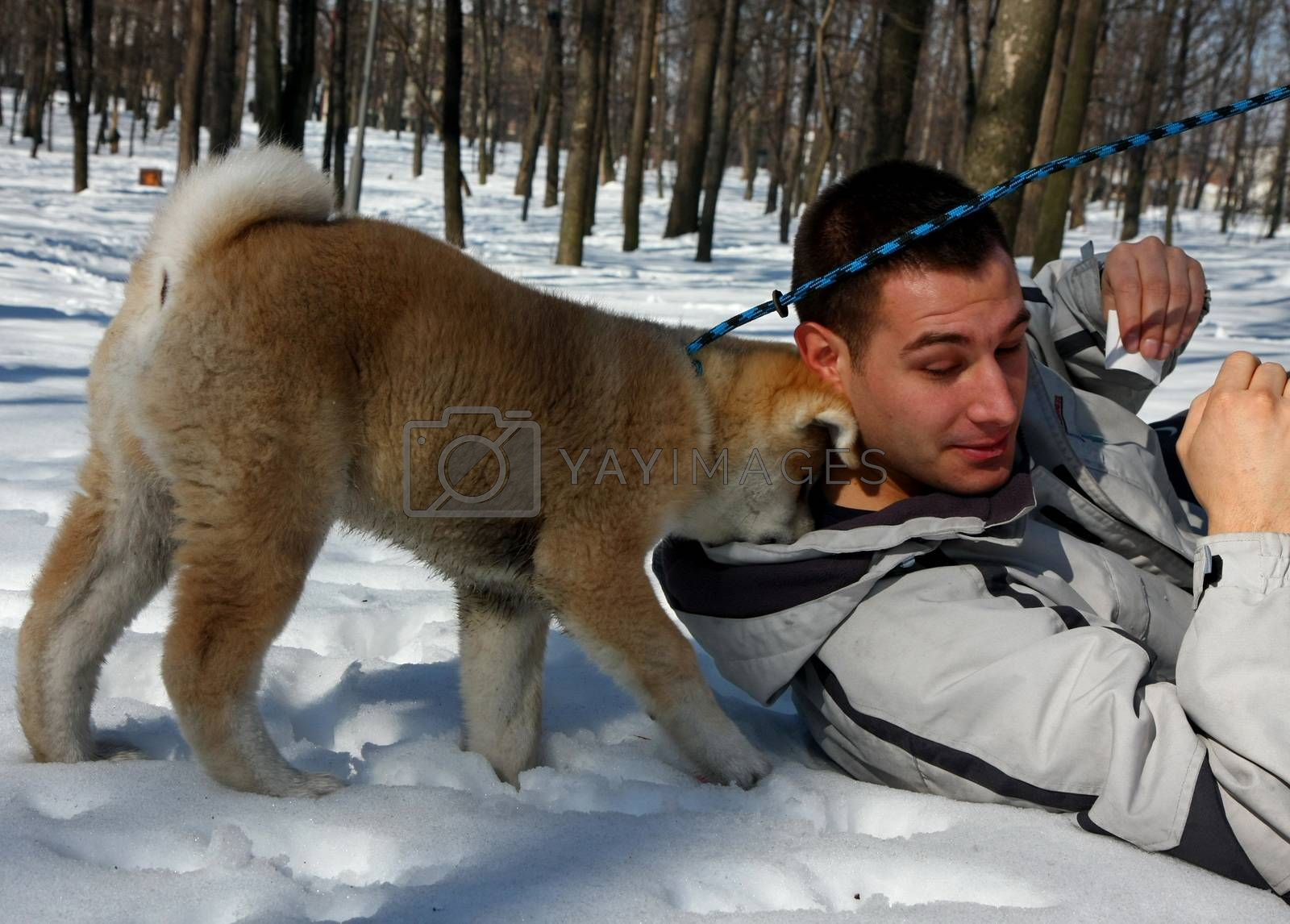 Puppie of Japanese dog Akita Inu, playing in the park with his owner,Belgrade,Serbia