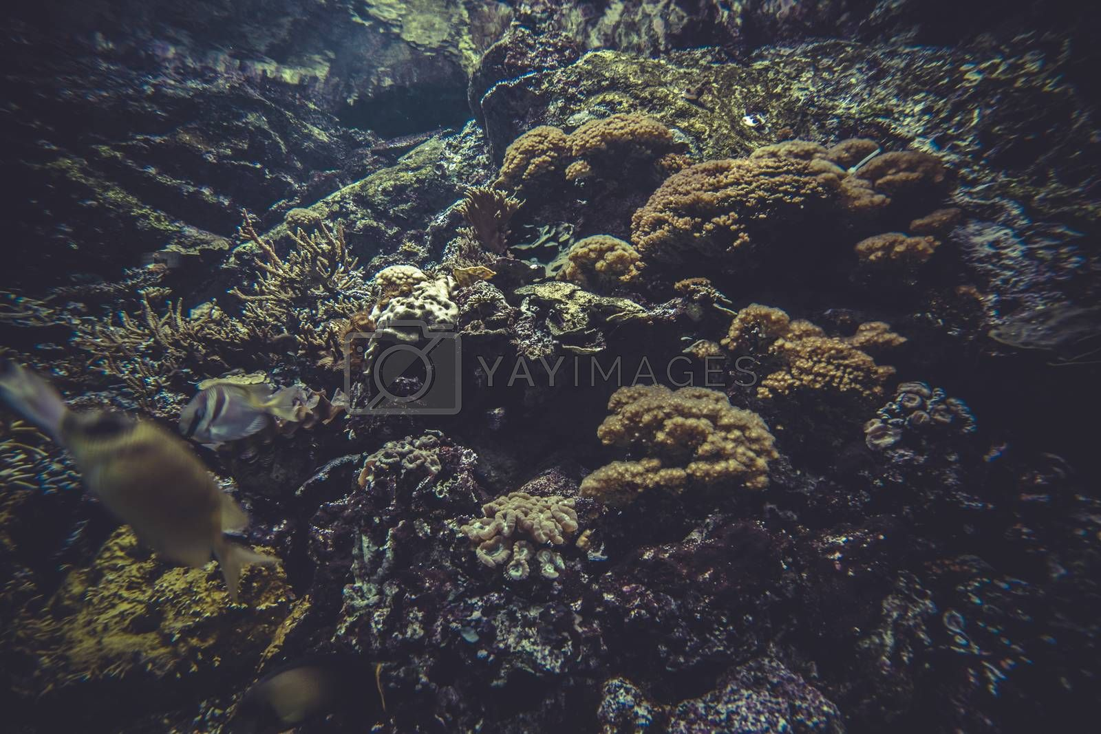 small coral reef ecosystem