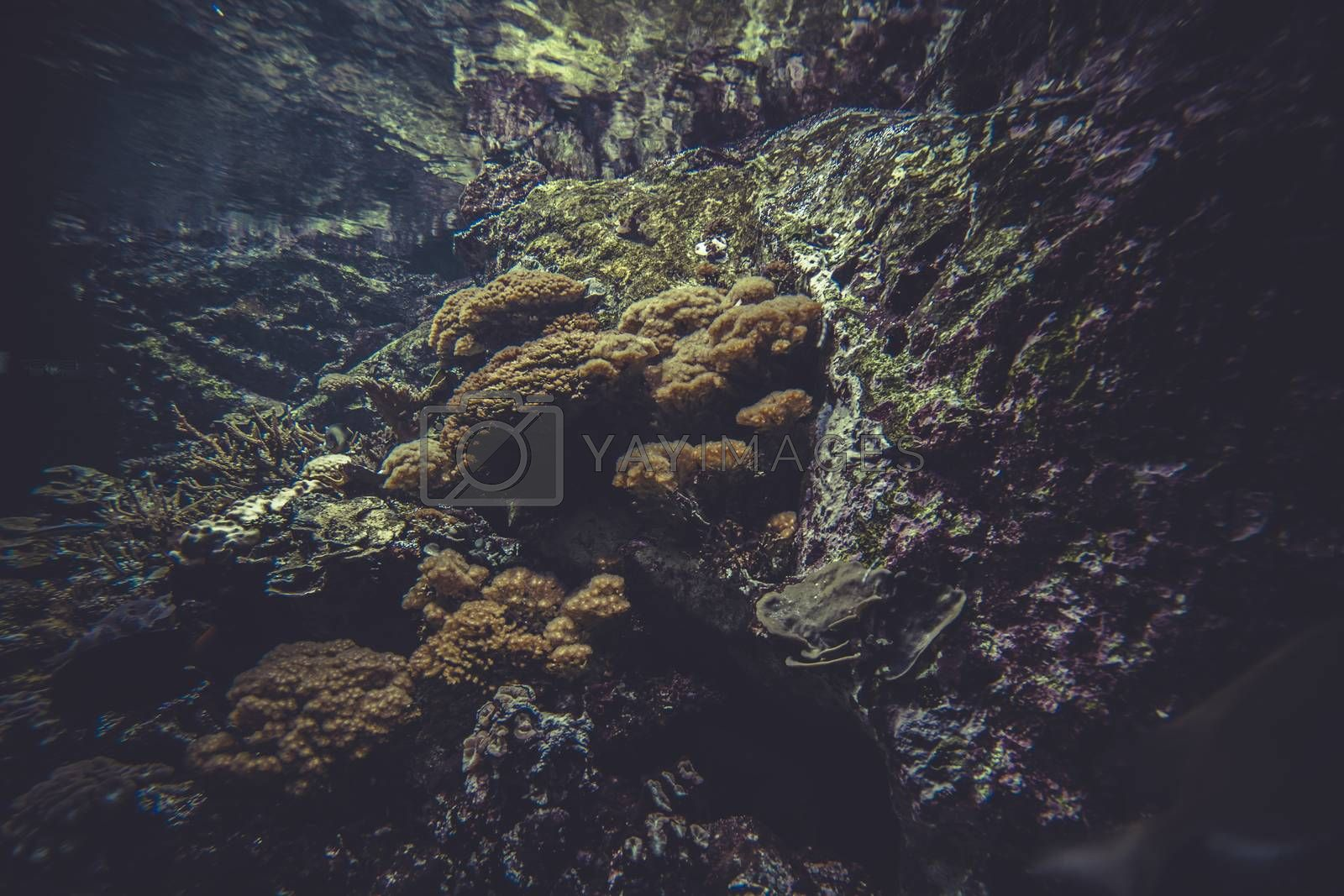 natural small coral reef ecosystem