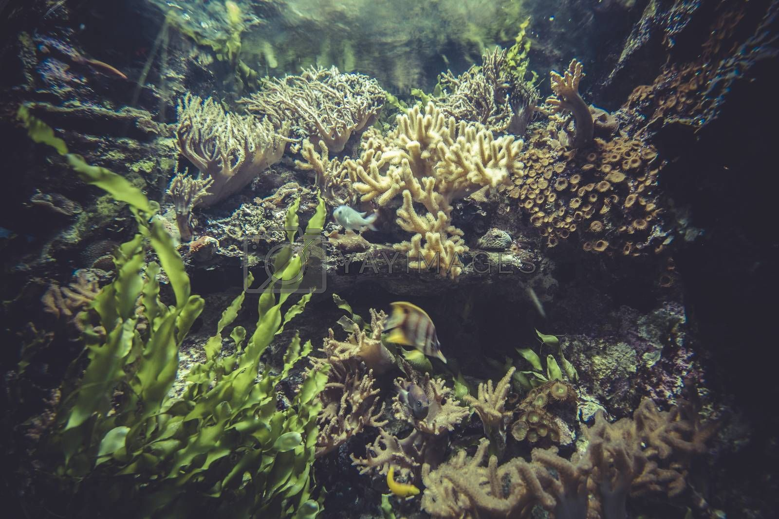 biodiversity, small coral reef ecosystem