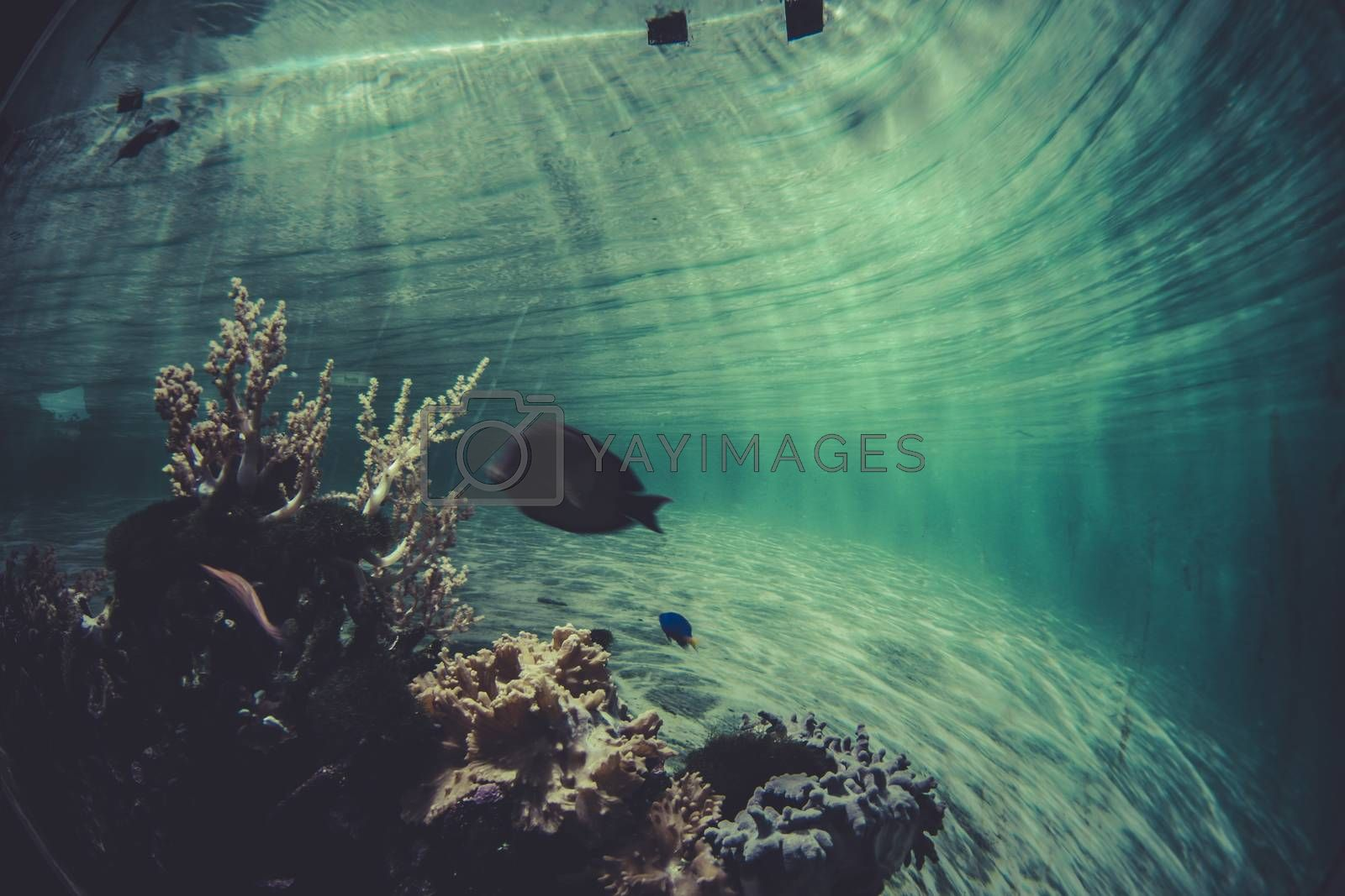 environment, small coral reef ecosystem