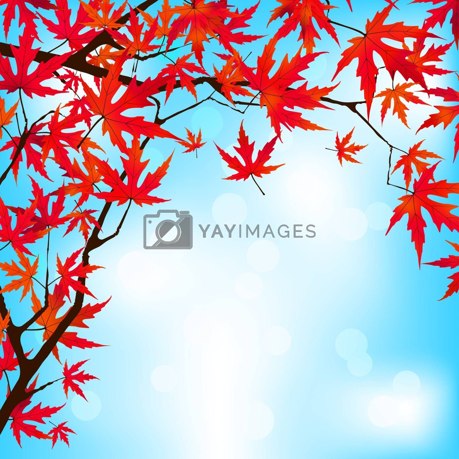 Red Japanese Maple leaves against blue sky. EPS 8 vector file included