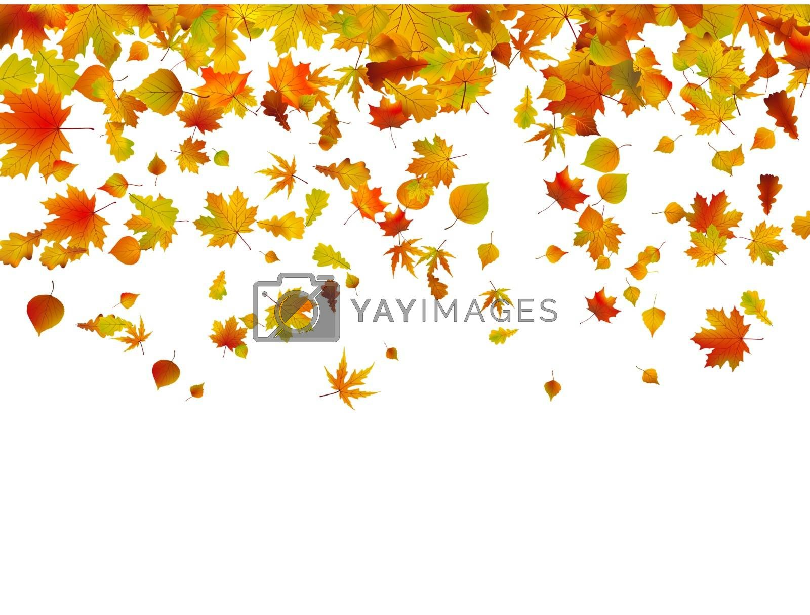 Background of autumn leaves. EPS 8 vector file included