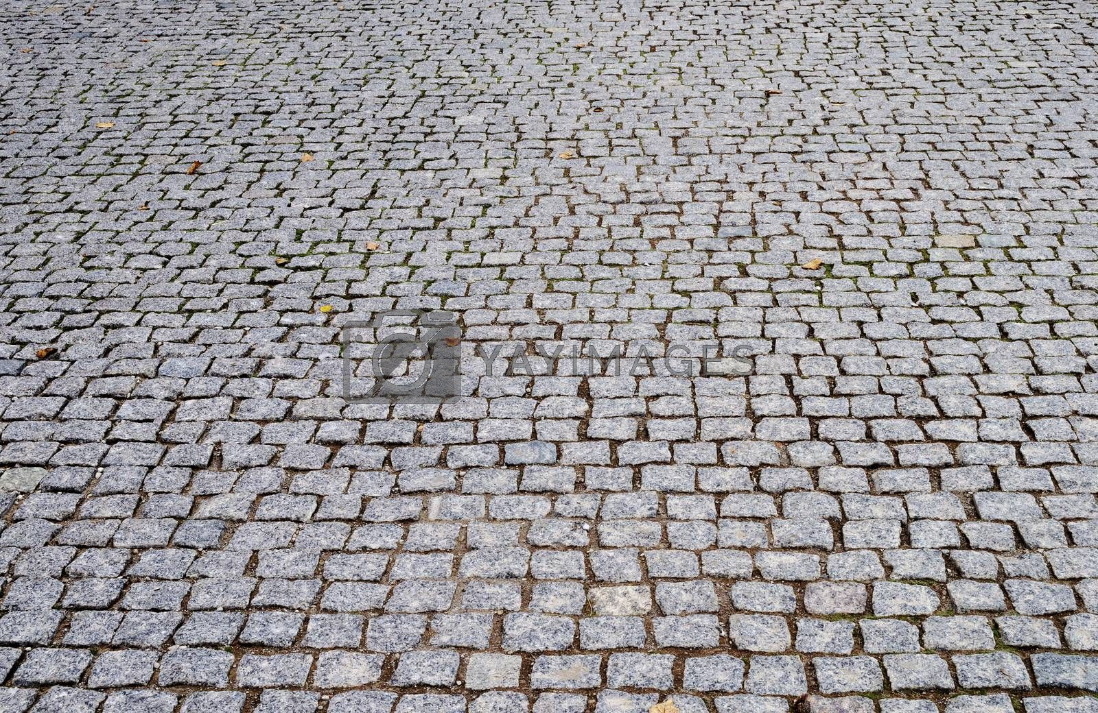 Paving blocks of gray stone with fallen leaves