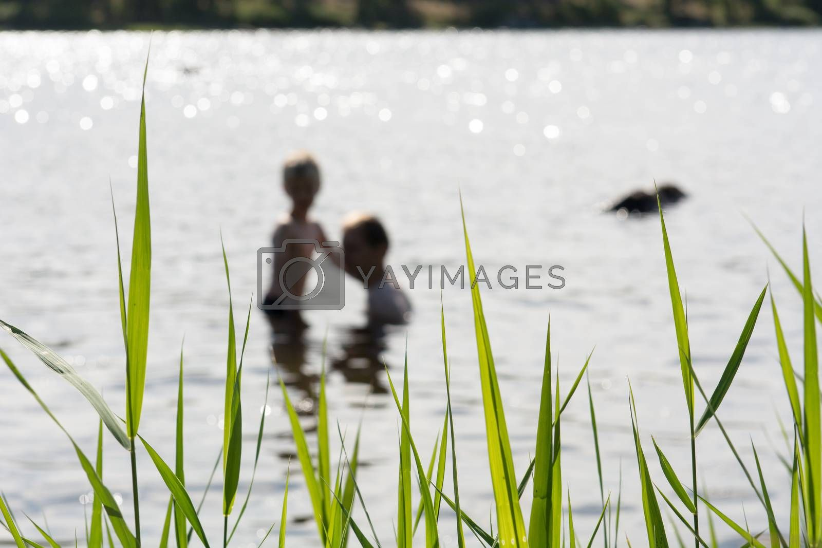 Father and son in a lake with plants in the foreground in Sweden
