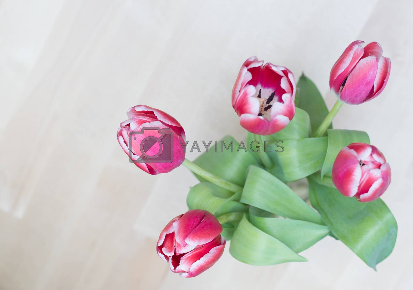 bouquet of five tulips on white background