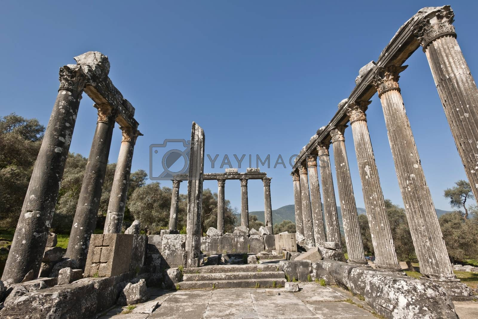 The Temple of Zeus at Euromos is to me the perfect ruined Greek temple.  Set in a forest of olive trees just east of the D525 highway between Selcuk (Ephesus) and Bodrum (25 km/16 miles SE of Lake Bafa, 13 km/8 miles NW of Milas), just south of the village of Selimiye (map), the Corinthian temple almost looks like a Hollywood set, except it's for real.  A shrine may have existed here from the 6th century BCE.  Believed to date from the time of Emperor Hadrian (117-138 CE), the Temple of Zeus Lepsynus and its precinct were excavated by Turkish archeologists starting in 1969. Look carefully and you'll see that some of the columns are unfluted, meaning perhaps that the temple was never finished.  Located about a mile south of the village of Selimiye, the temple area has no services, although there may be a villager selling cold drinks.  Stop for a half-hour's look if you're driving south from ?zmir or Ephesus headed for Milas, Bodrum or Marmaris.  This is actually a much larger archeological site than just the temple. The hillside to the east is littered with ruins, and if you spend an hour hiking around you can find a theater, an agora and massive defensive walls.