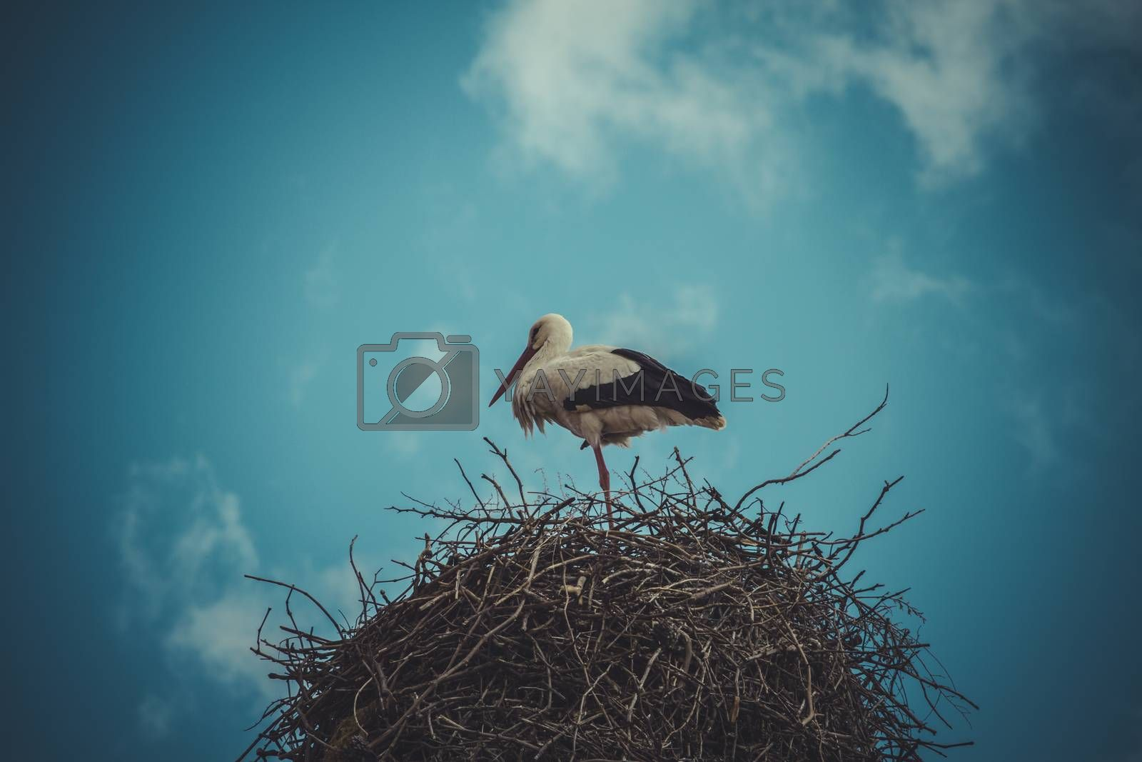 Season, Stork nest made ������of tree branches over blue sky in dramatic