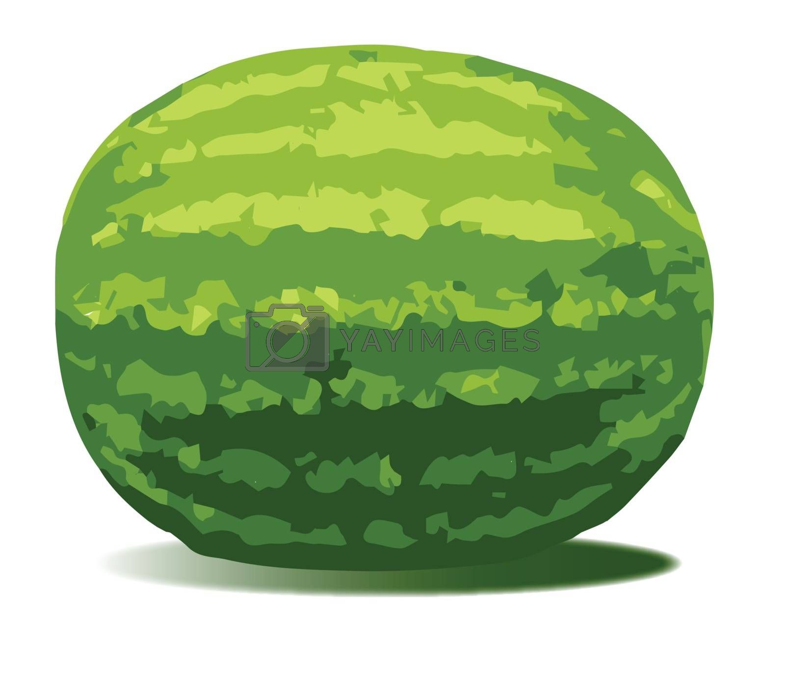 A typical watermelon isolated on a white background