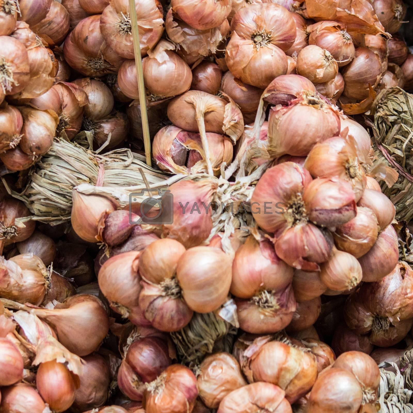 onions close-up