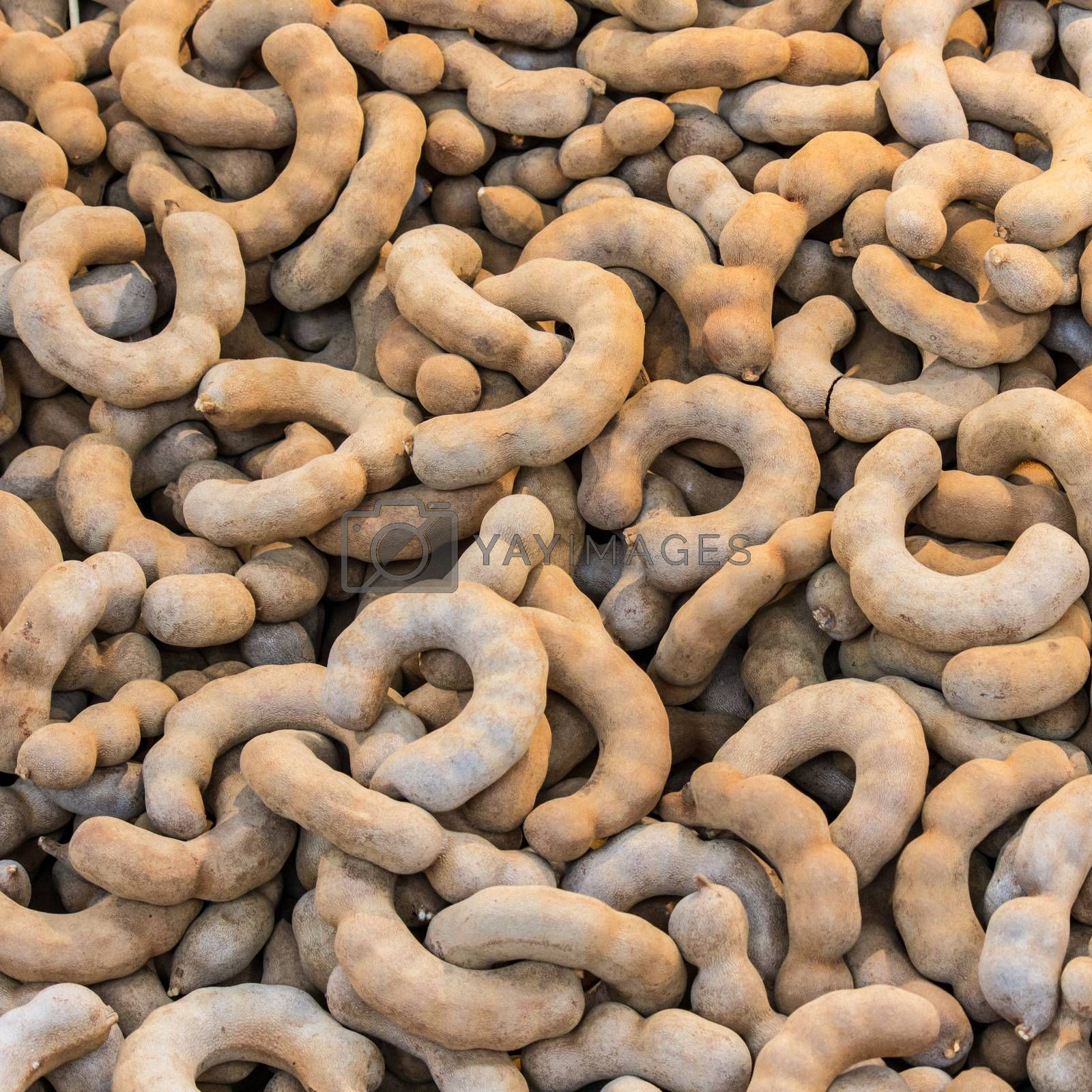 Tamarind taken as background. A sweet and sour fruit grown in Thailand. Nature's Laxative.