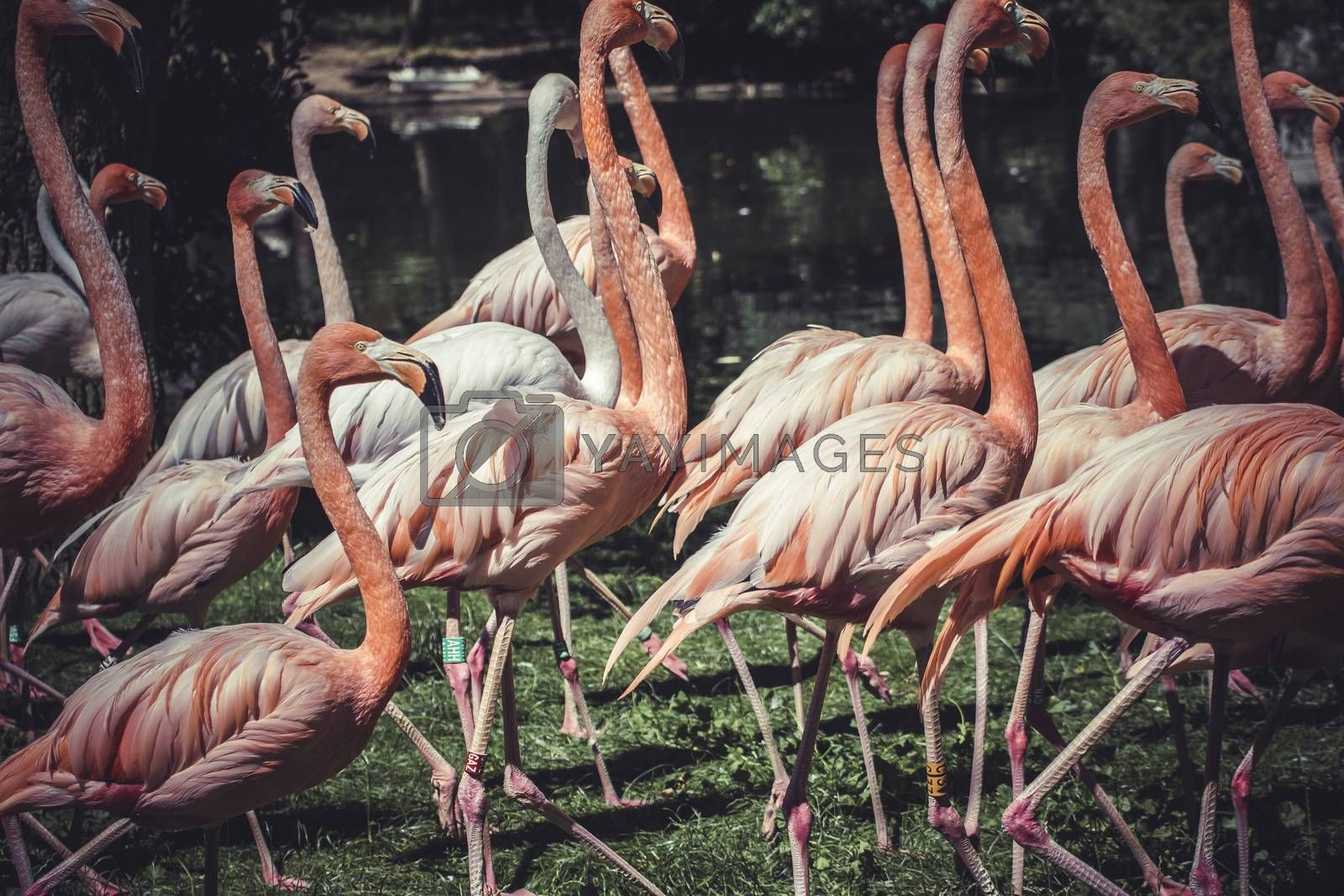 group of flamingos with long necks and beautiful plumage