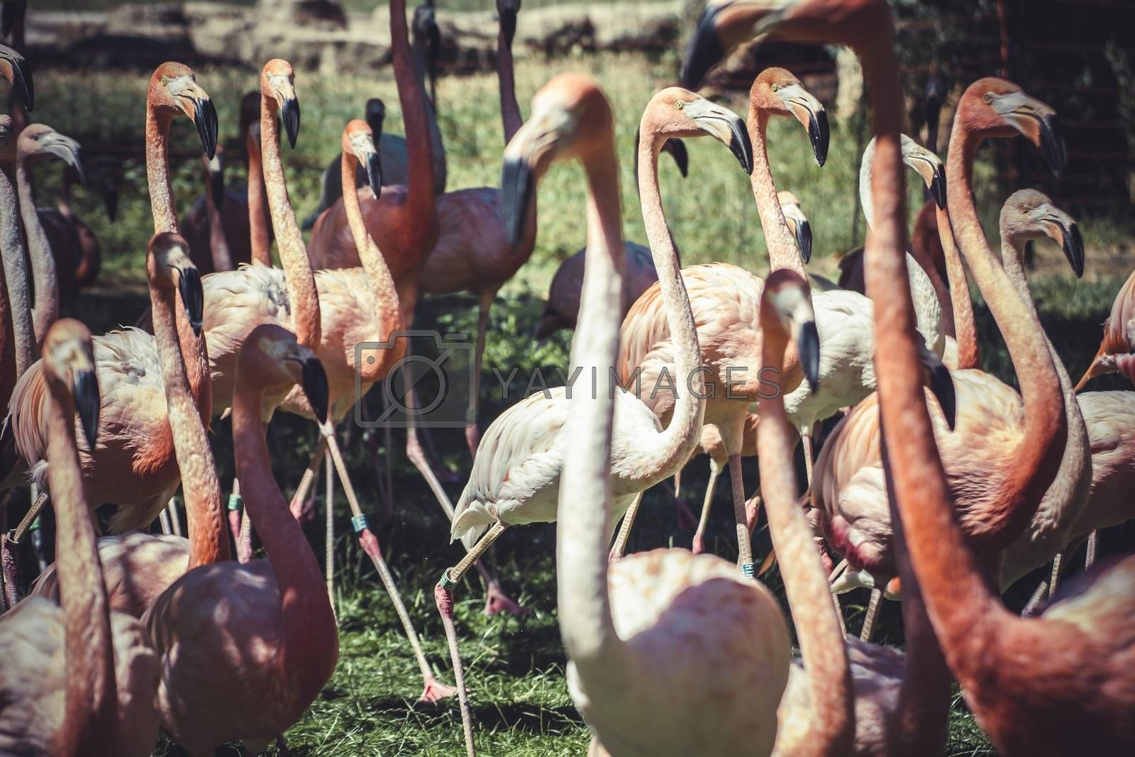 exotic group of flamingos with long necks and beautiful plumage