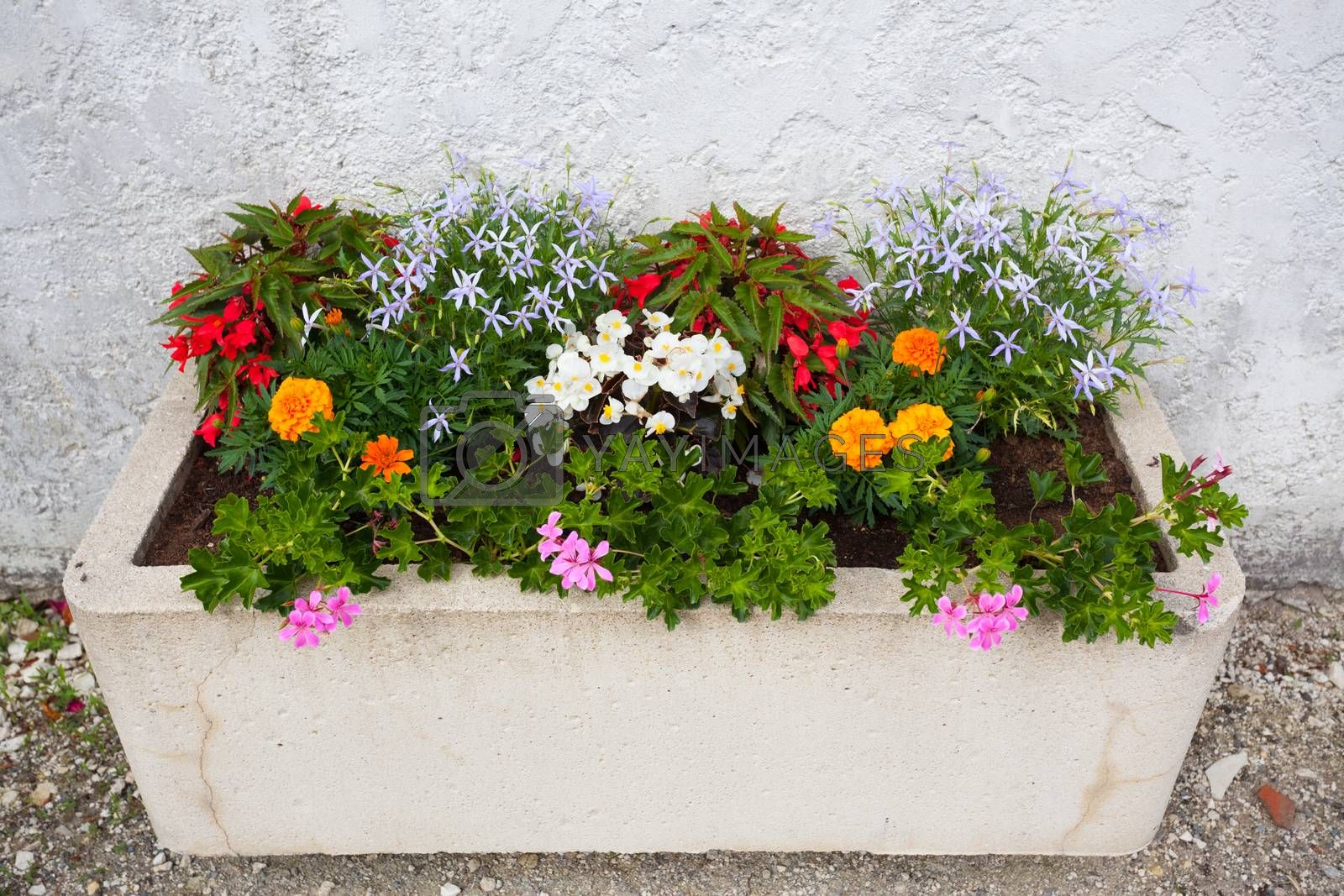 Colorful window box in Charente Maritime France