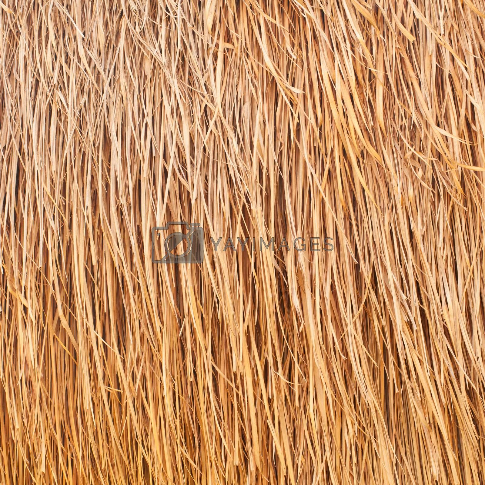 palm tree leaves as background