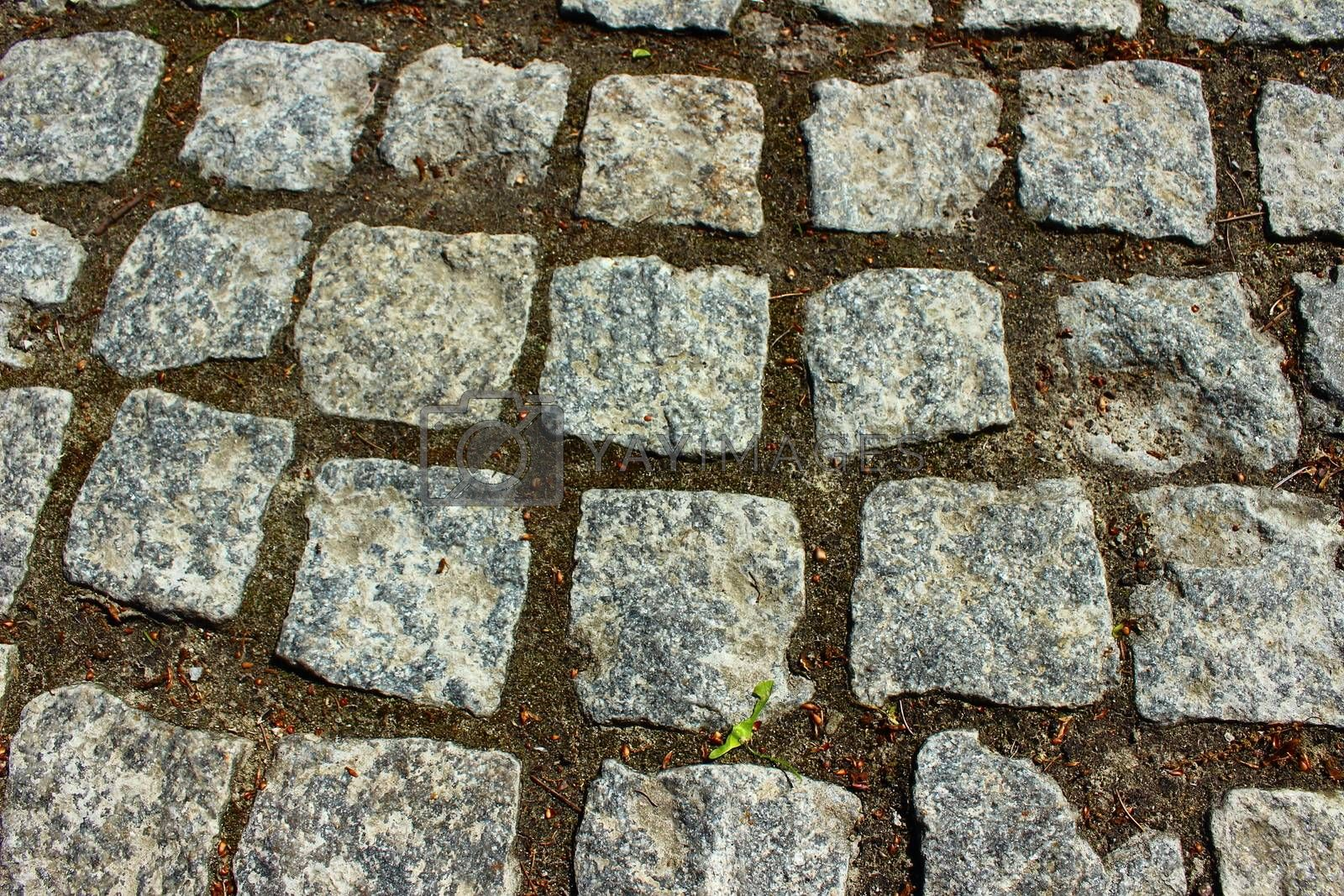 path of square stones between which the earth and moss