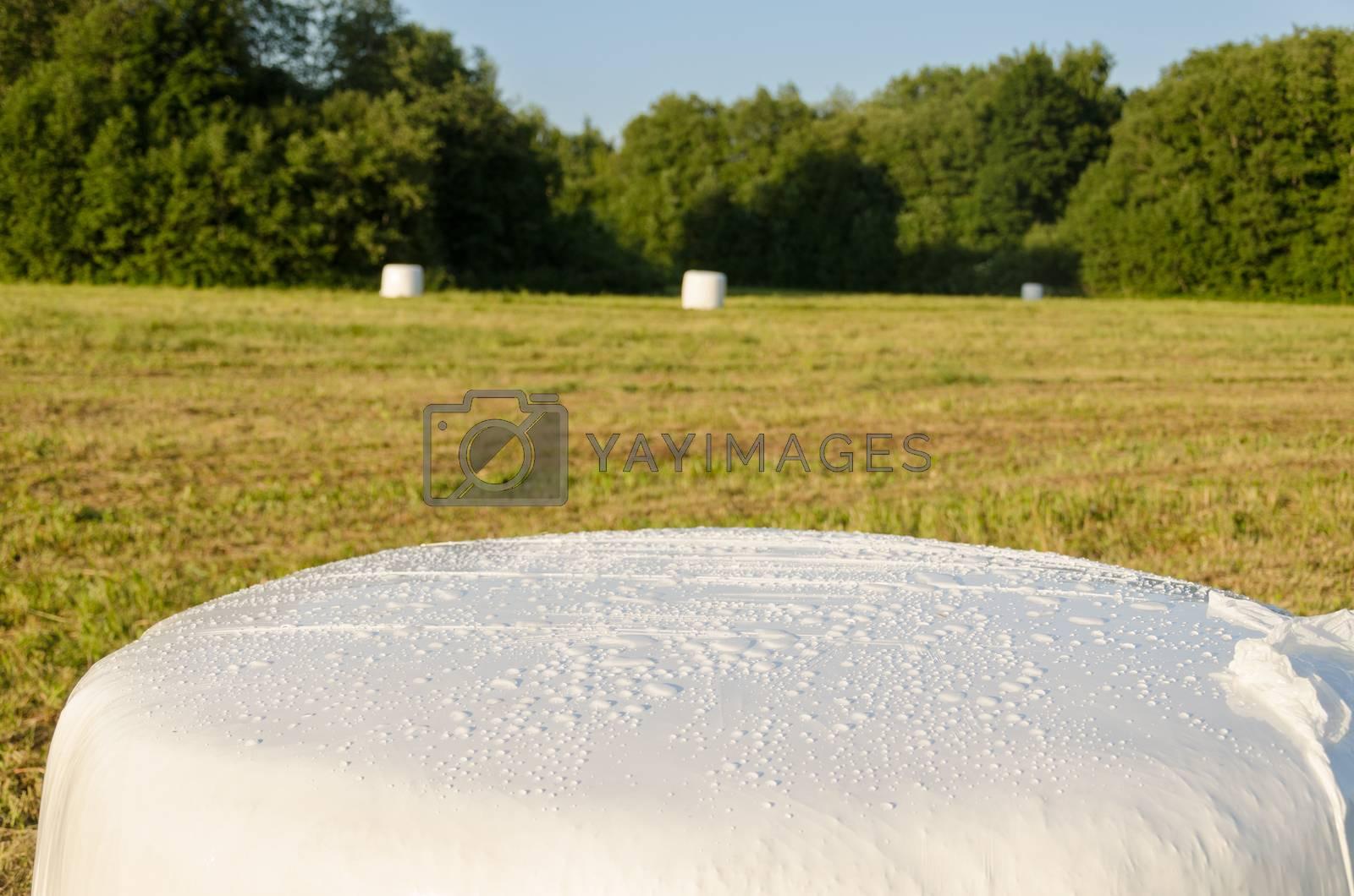 polythene wrapped grass straw bales. Animal fodder  by sauletas