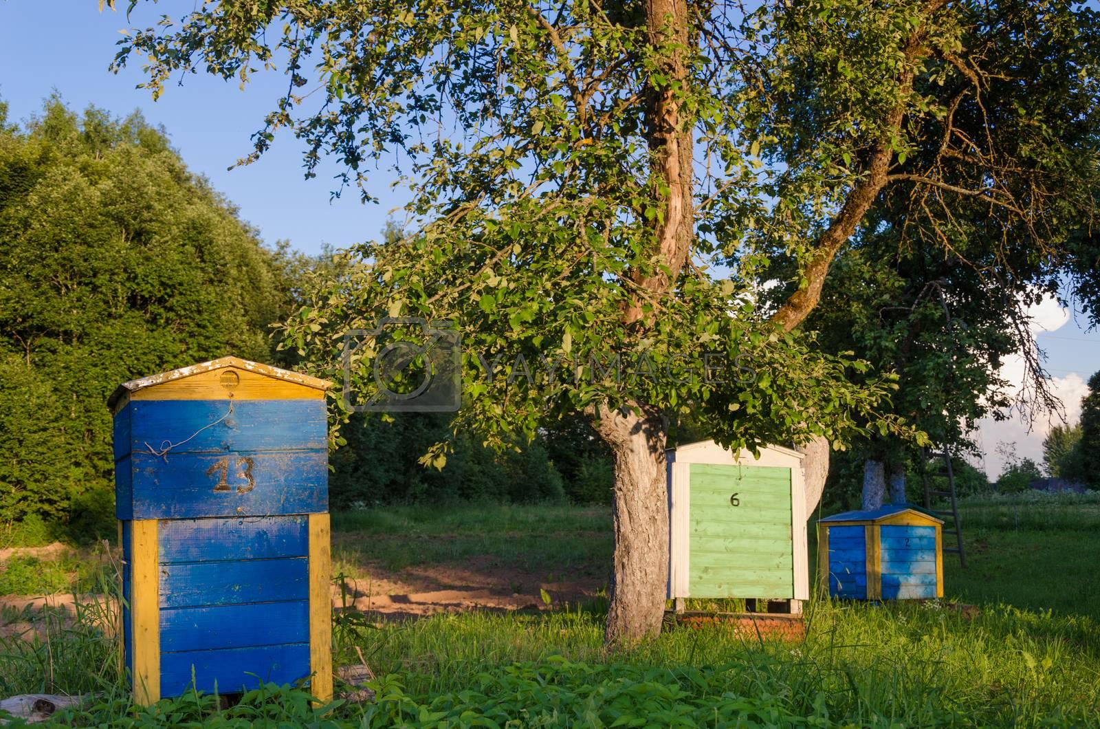 wooden beehive lit evening sun in the garden  by sauletas