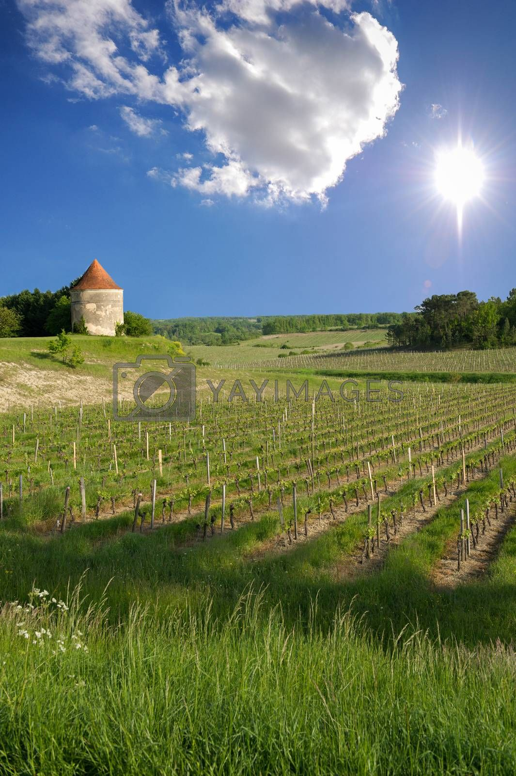 Vineyards of Saint Emilion, Bordeaux Vineyards by FreeProd