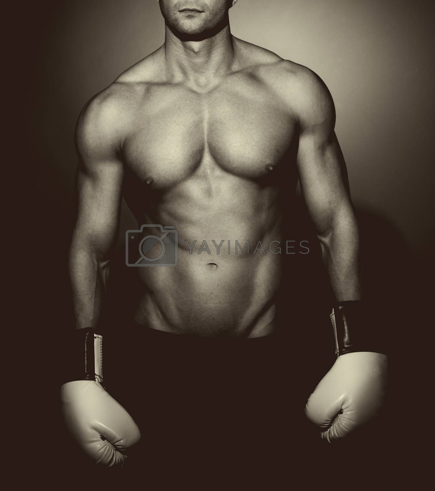 Boxer posing on dark background looking at camera.