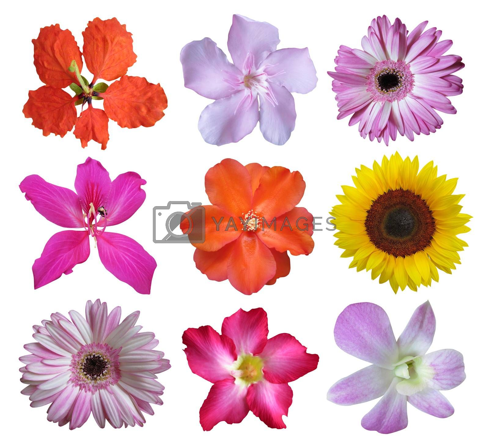 Flower collection isolated on white background